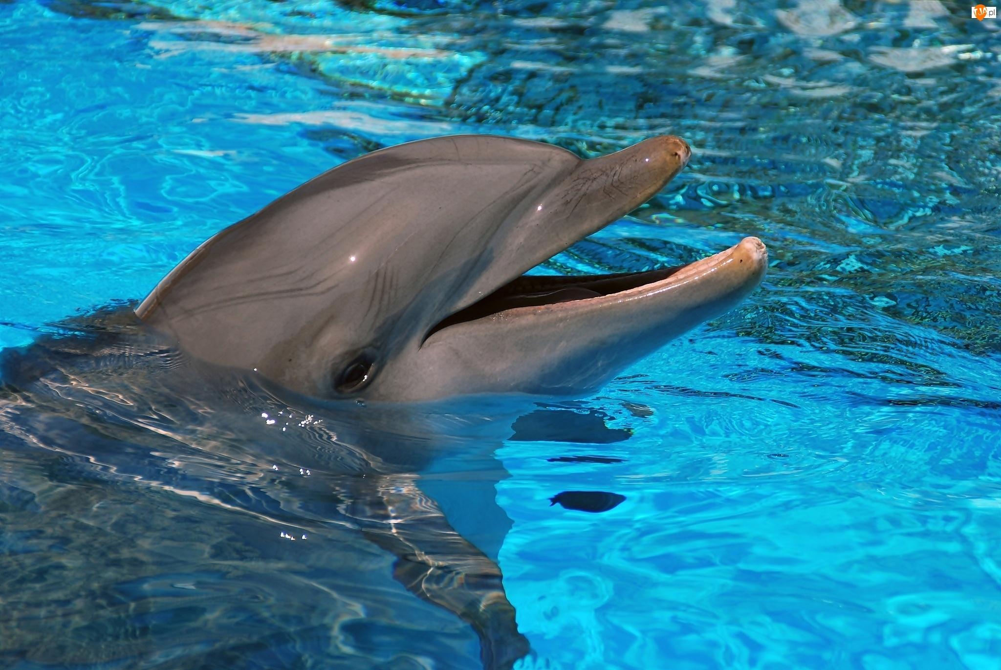 Woda, Delfin, Basen