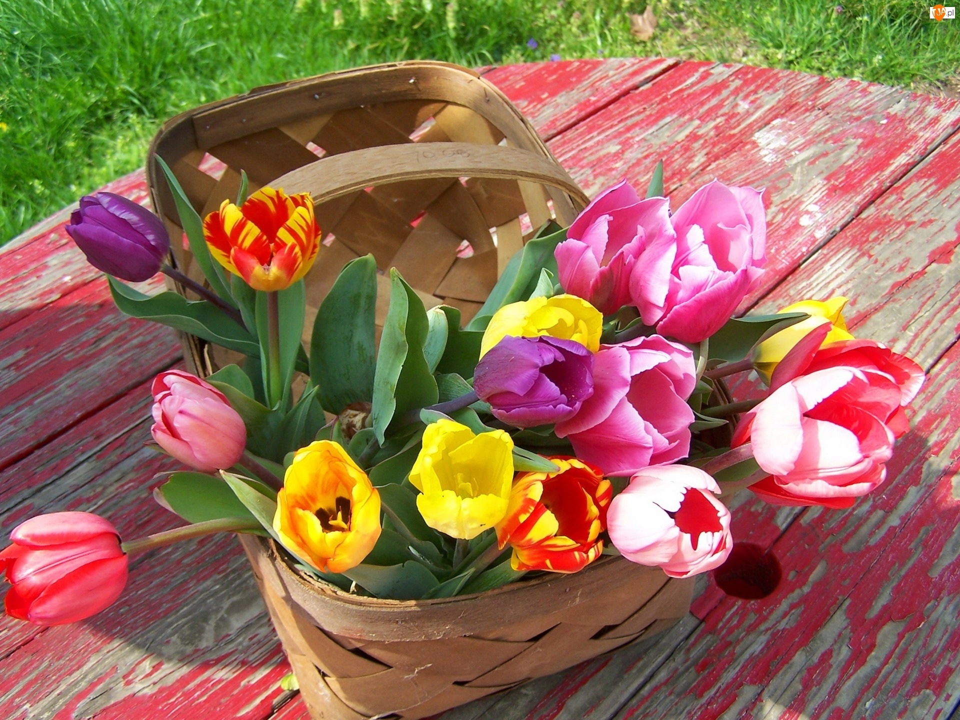 Kolorowe, Stół, Tulipany, Koszyk