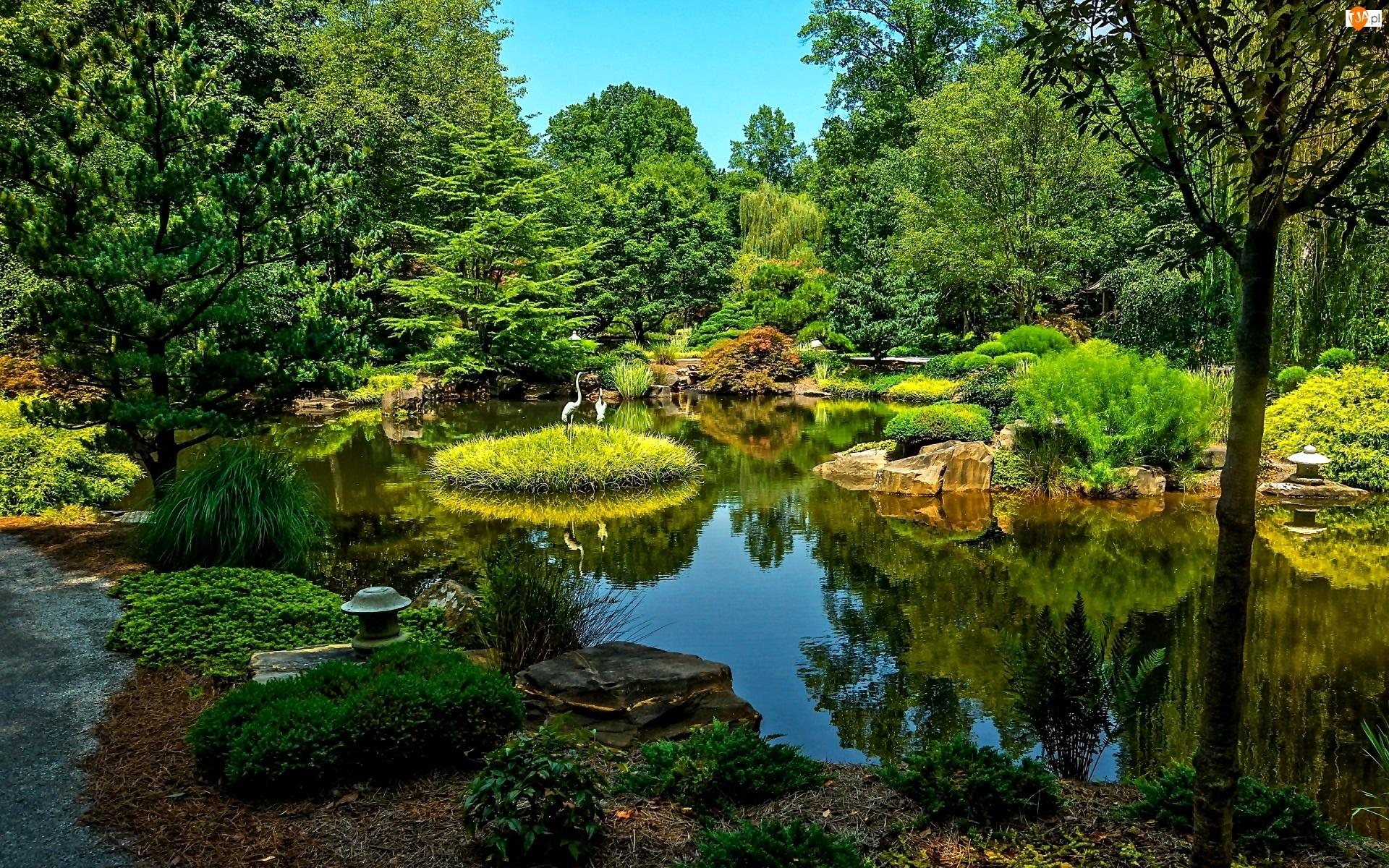 Park, Żurawie, Staw, Zieleń