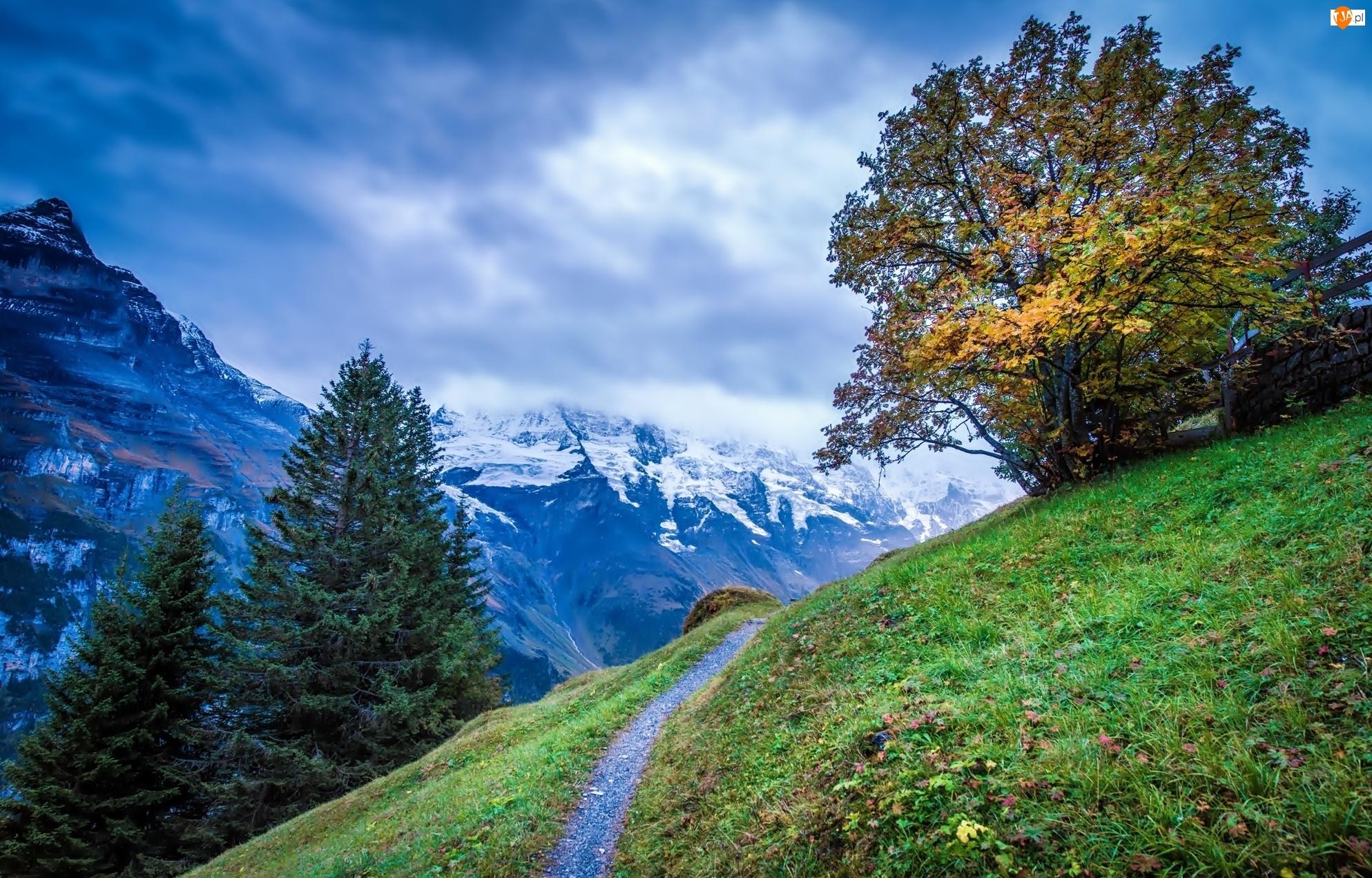 Góry, Drzewa, Łąka, Ścieżka