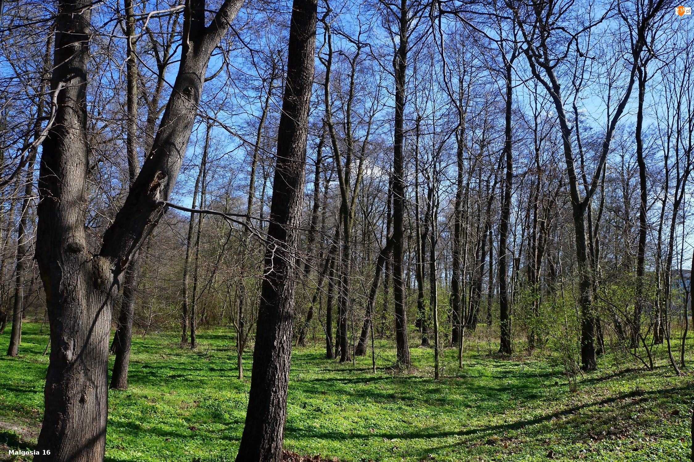 Rośinność, Drzewa, las