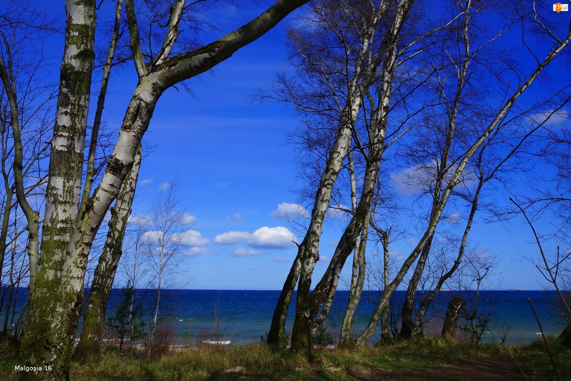 Morze, Drzewa, Brzoza