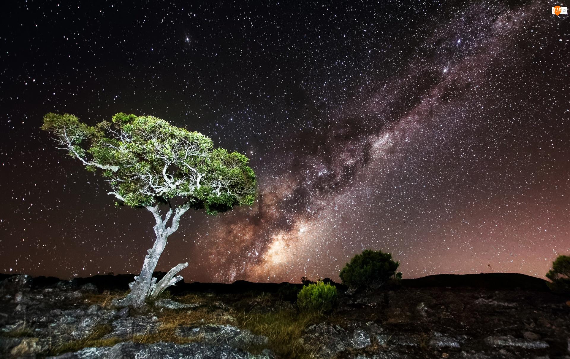 Skały, Gwiazdy, Drzewo, Noc