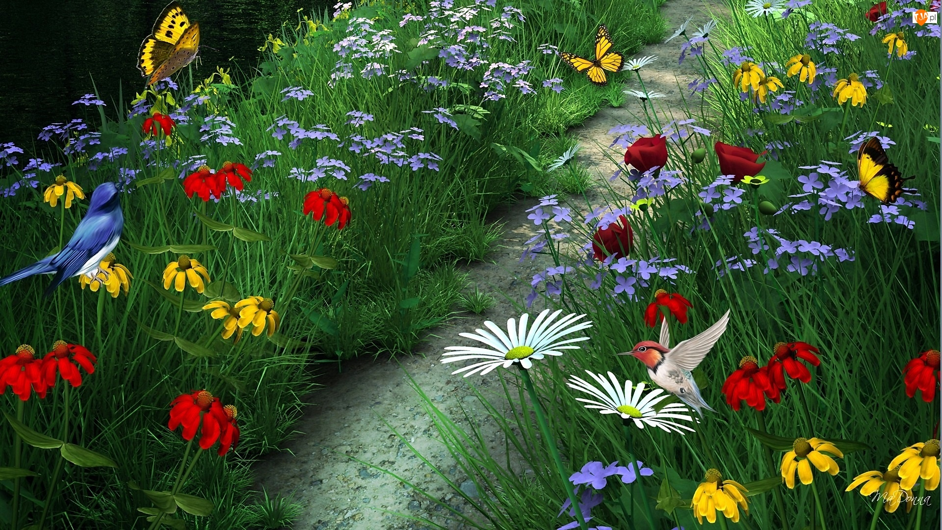 Motyle, Kwiaty, Kolorowe, Ścieżka, Rzeka, Polne, Ptaszki