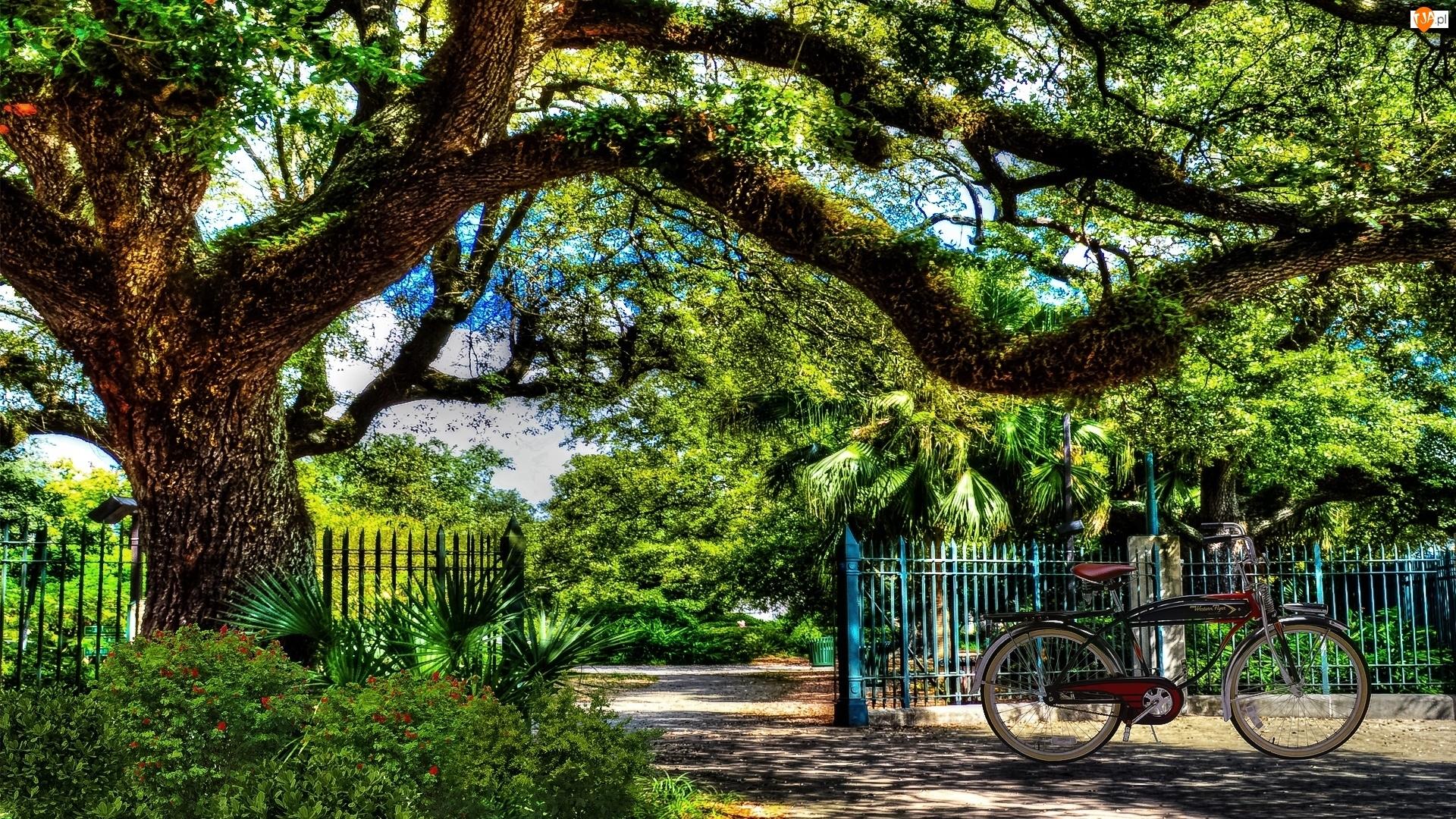 Park, Rower, Wejście, Drzewo