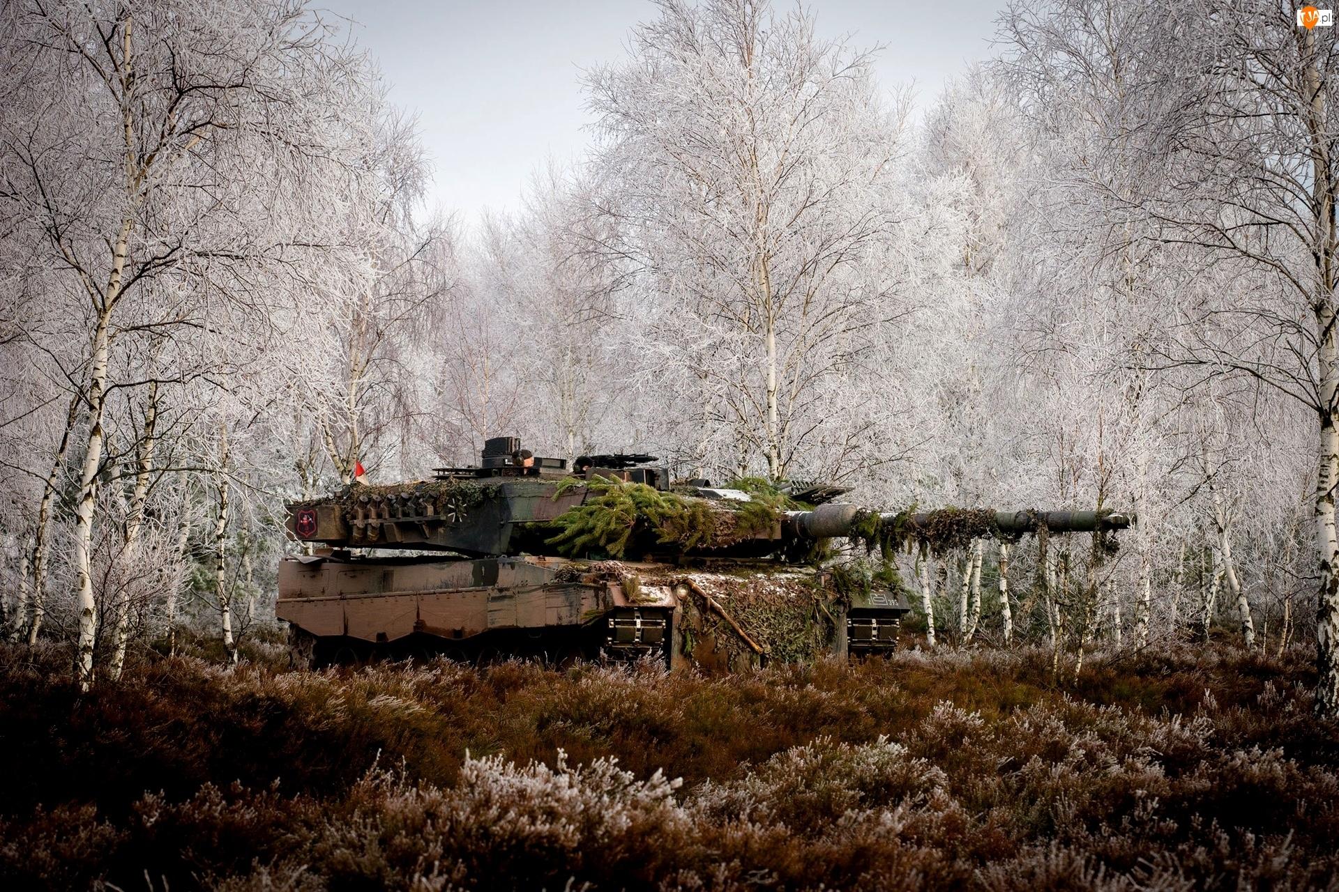 Czołg, Brzozy, Leopard 2a5, Trawa