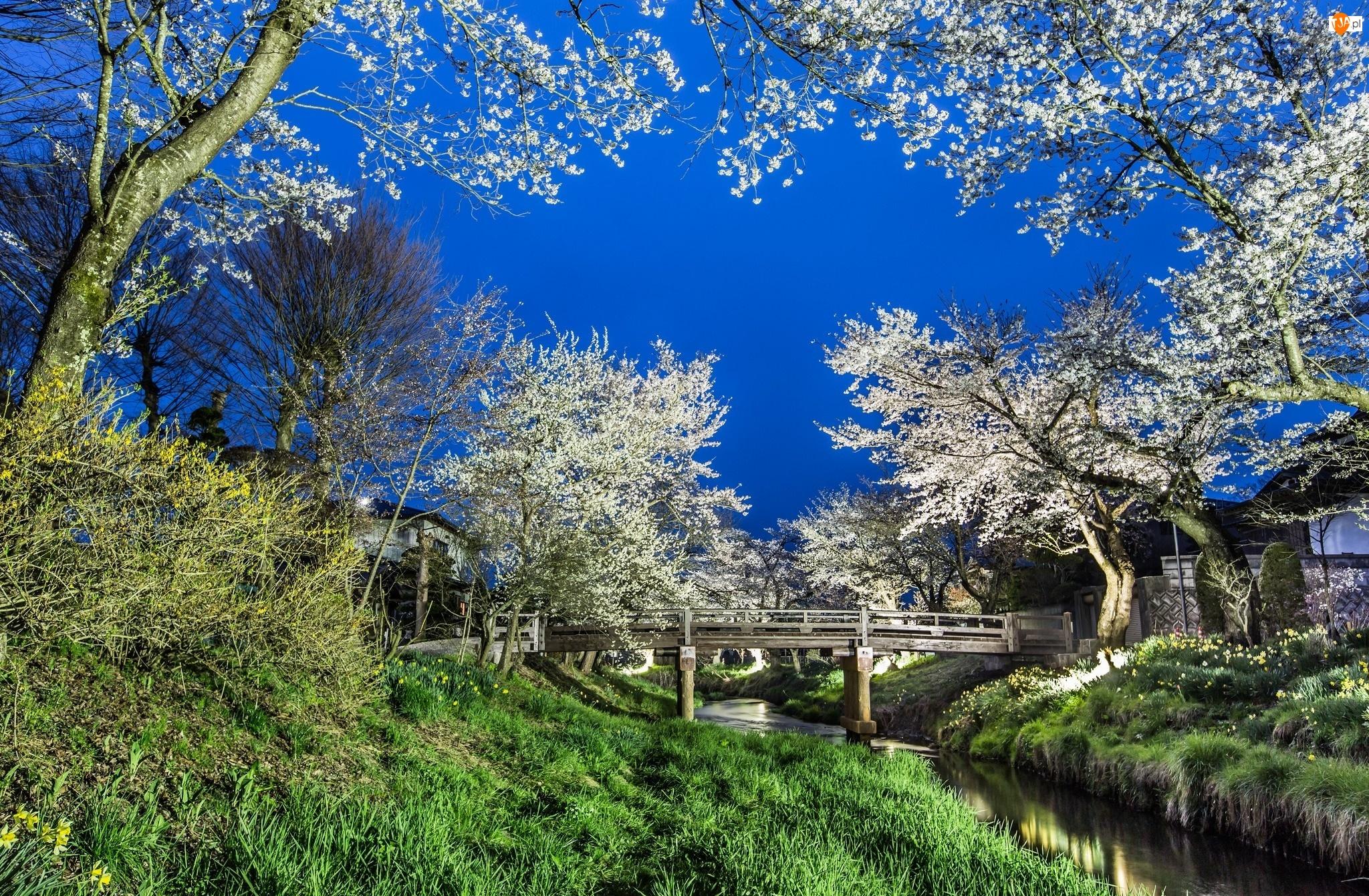 Park, Rzeka, Drzewa, Mostek