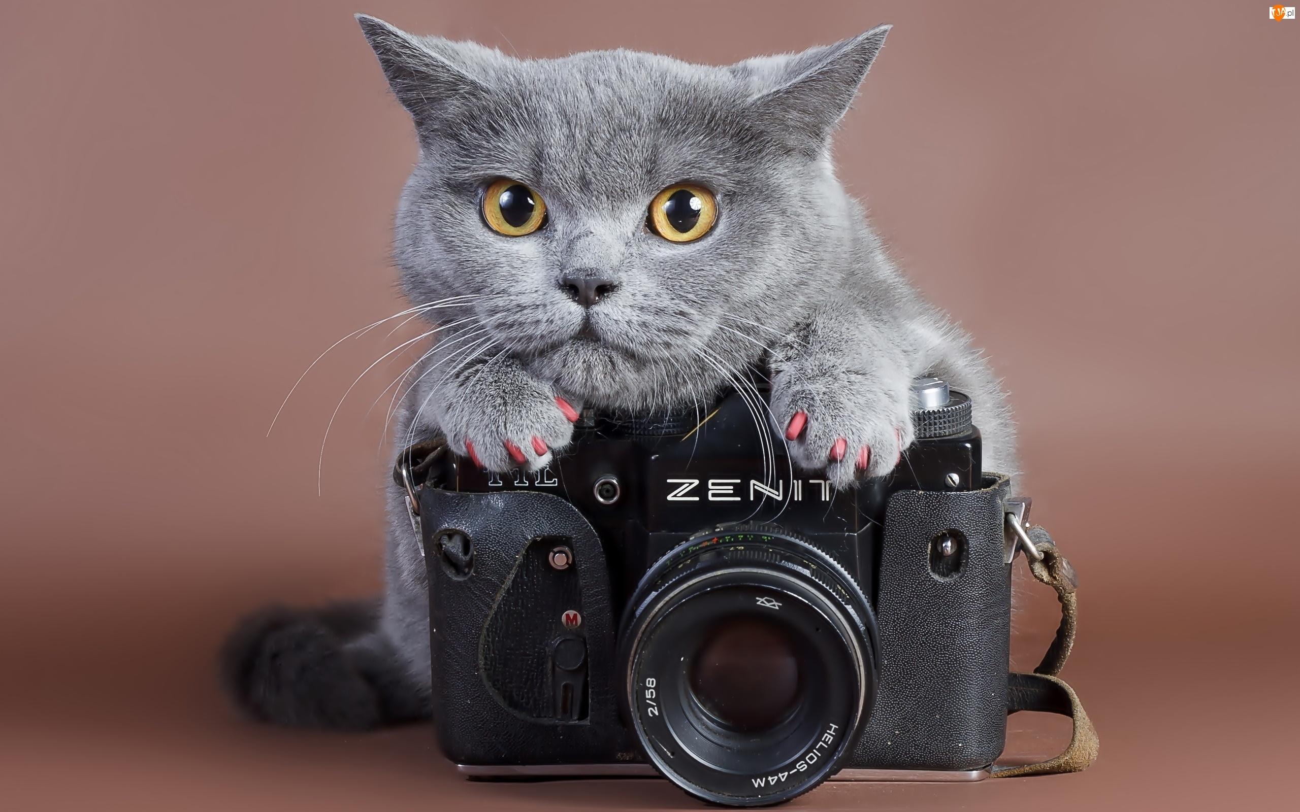 Kot, Zenit, Aparat, Fotograficzny
