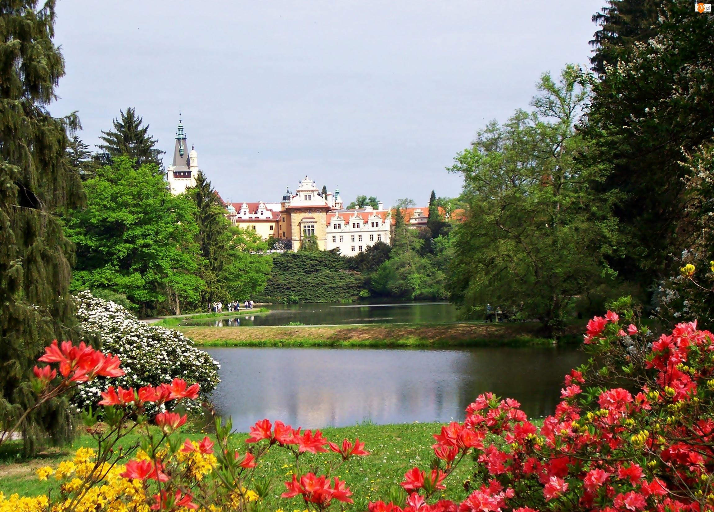 Jezioro, Rododendrony, Zamek, Pruhonice, Park, Wiosna