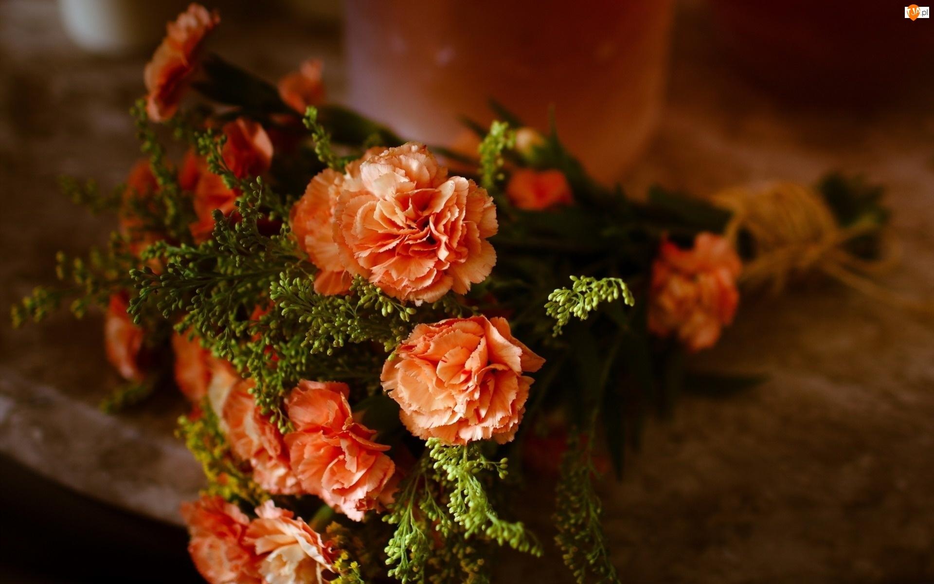 Kwiaty, Goździki