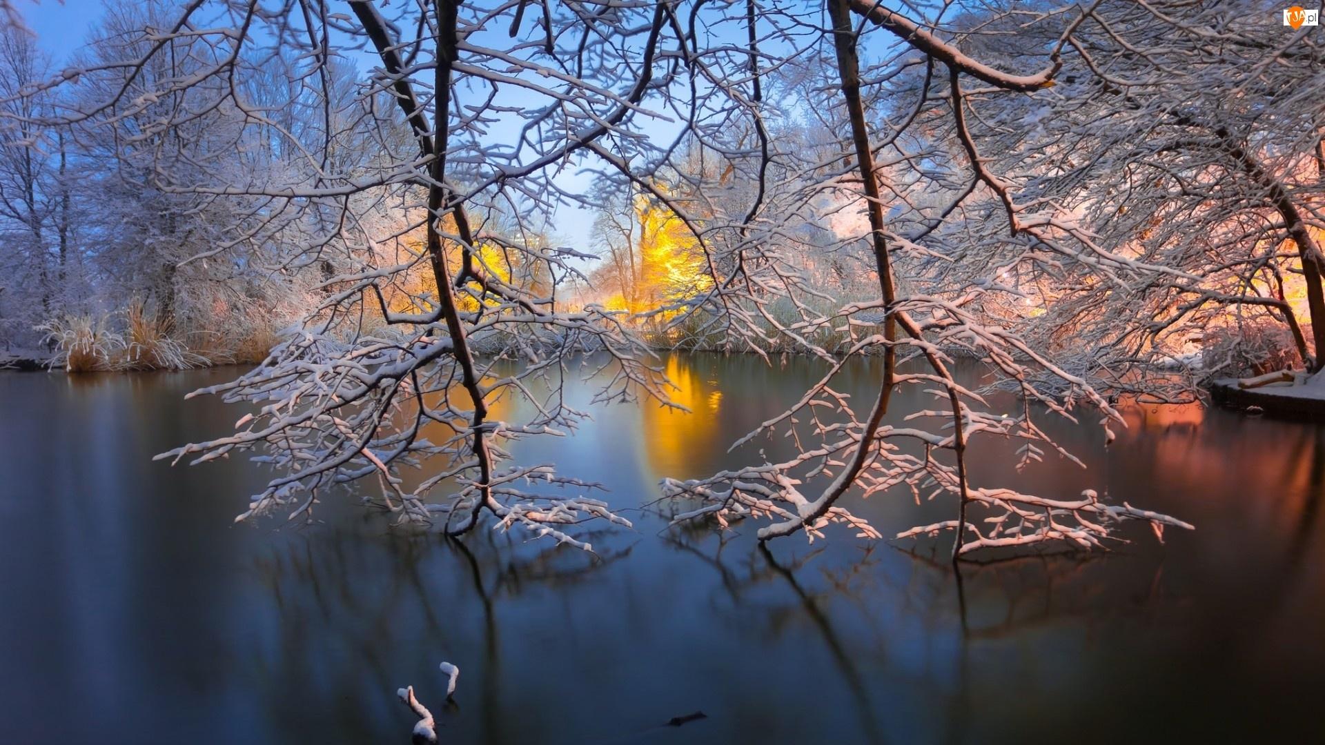 Gałęzie, Park, Zima, Staw, Drzewa