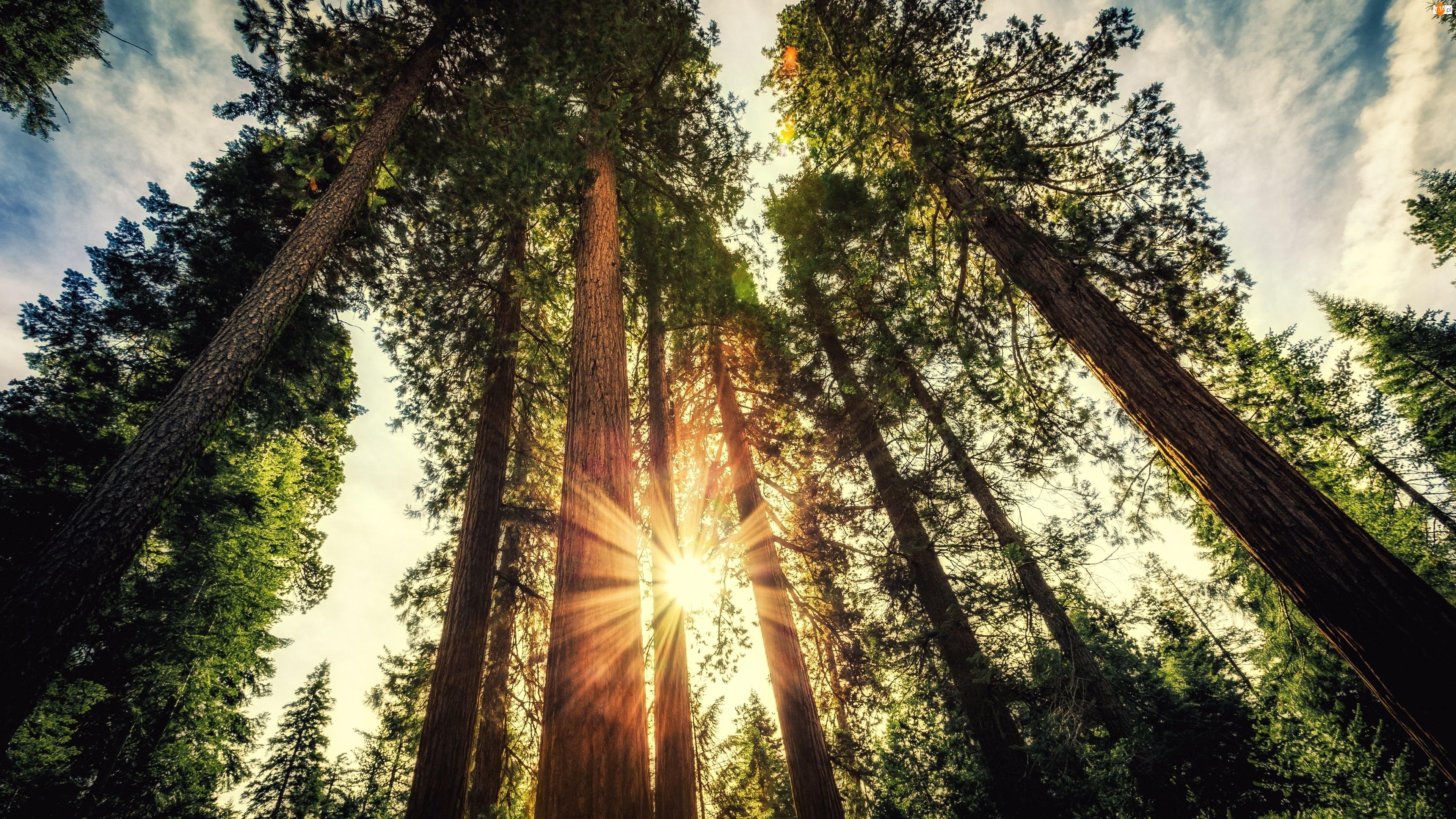 Słońce, Drzewa, Pnie