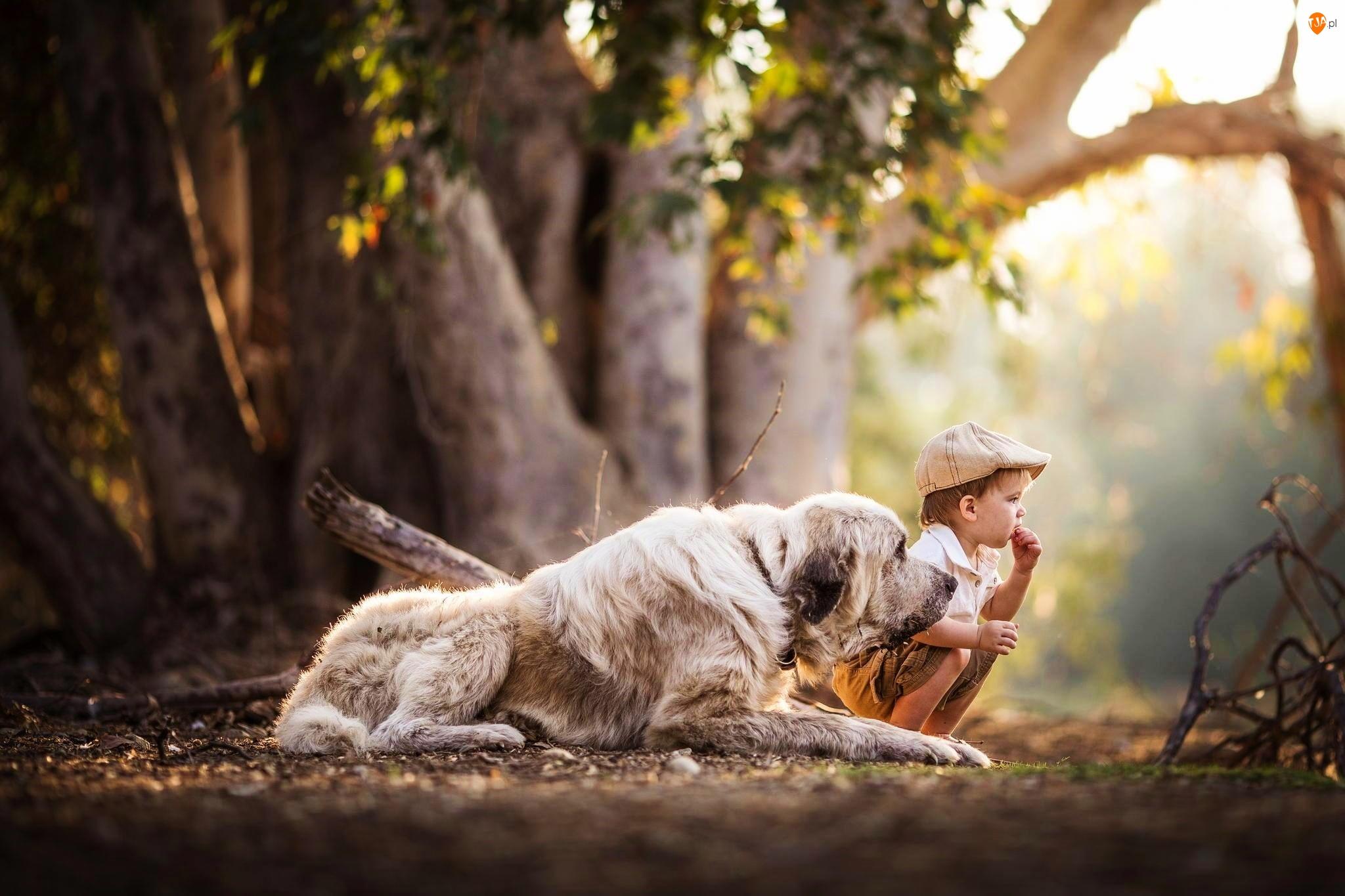 Chłopiec, Owczarek środkowoazjatycki, Pies, Pnie