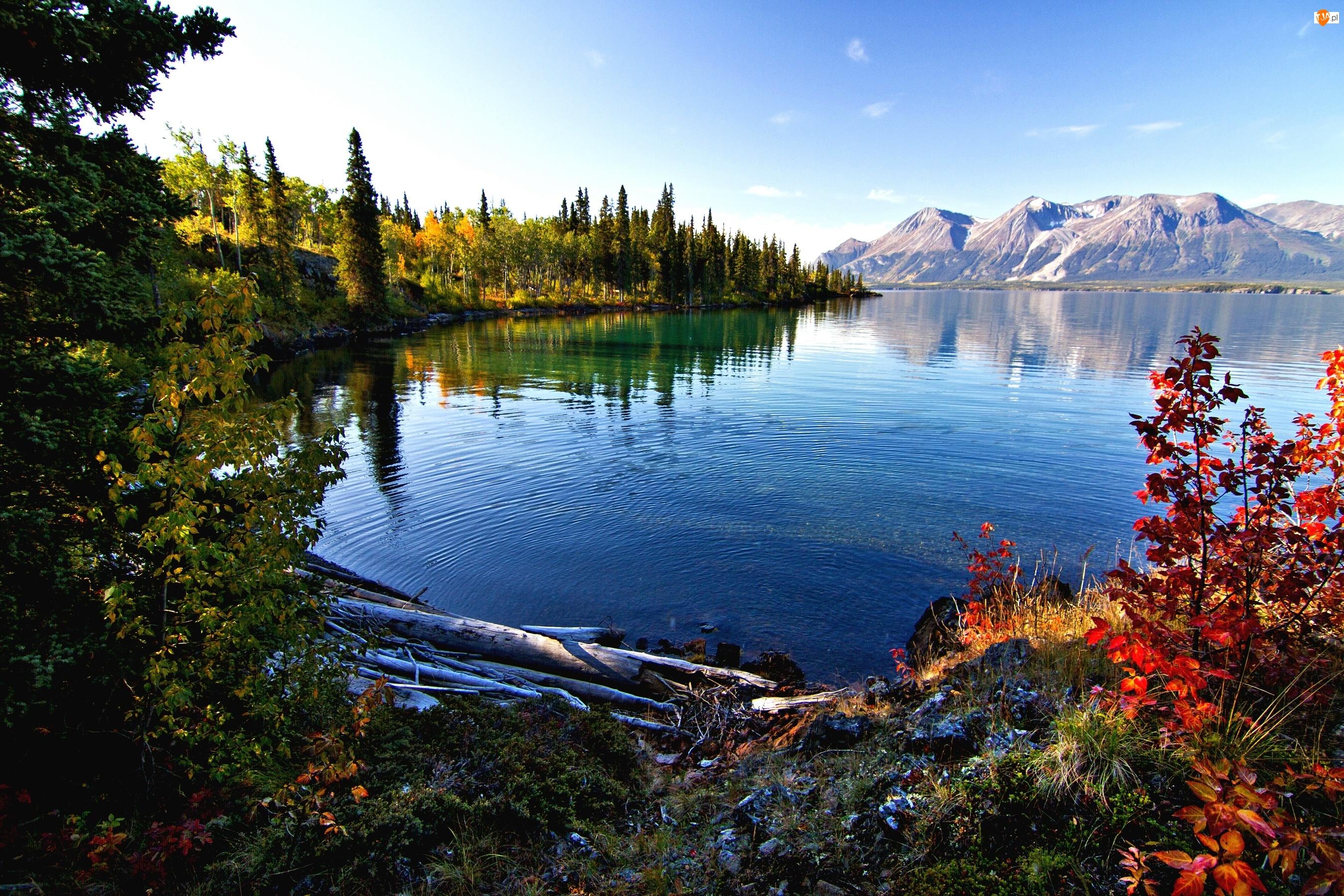 Góry, Jezioro, Brzegi, Porośnięte, Roślinność