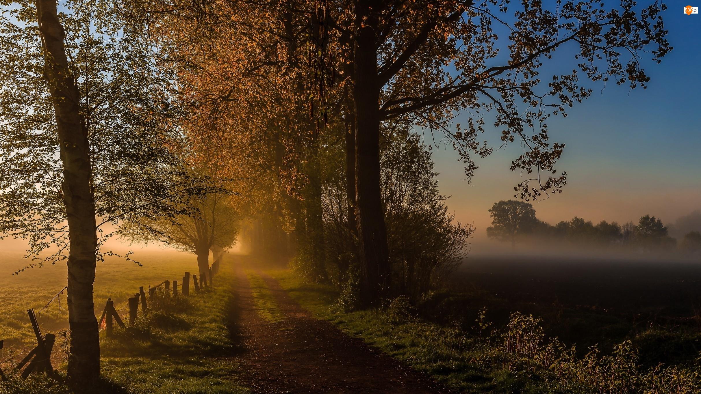 Polna Droga, Mgła, Drzewa, Poranek