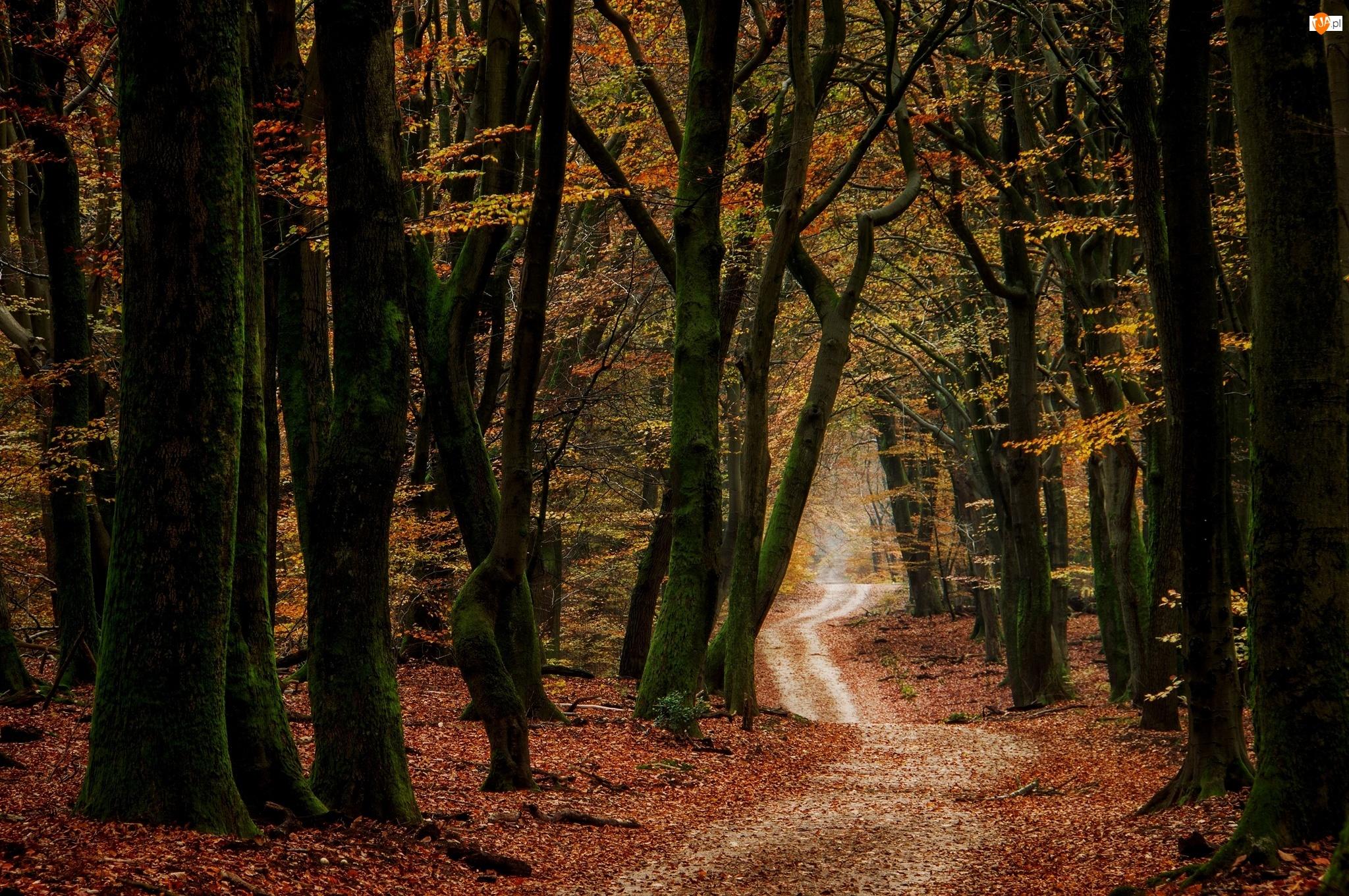 Jesień, Liście, Droga, Las