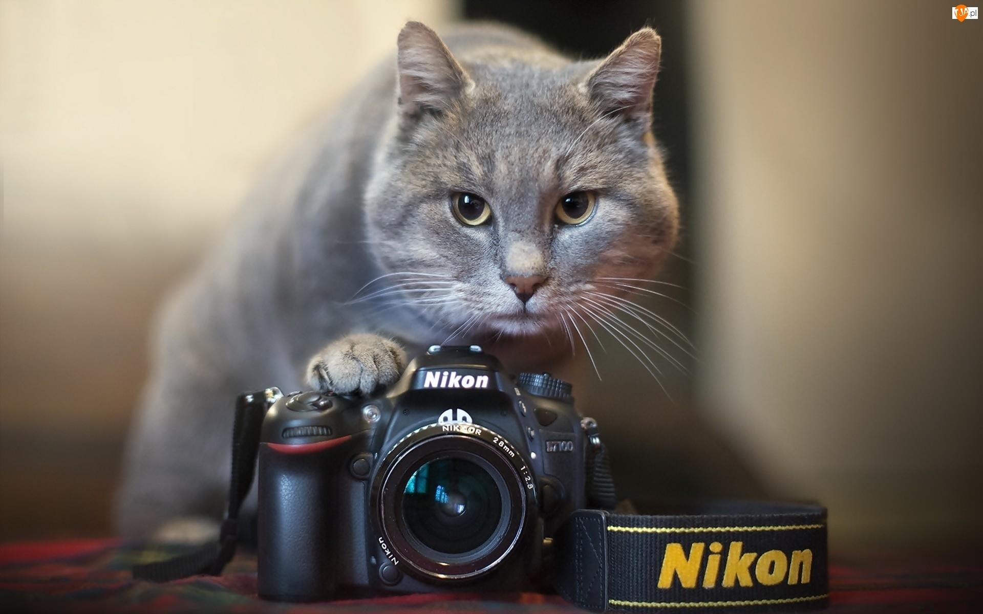 Kot, Nikon, Aparat, Fotograficzny