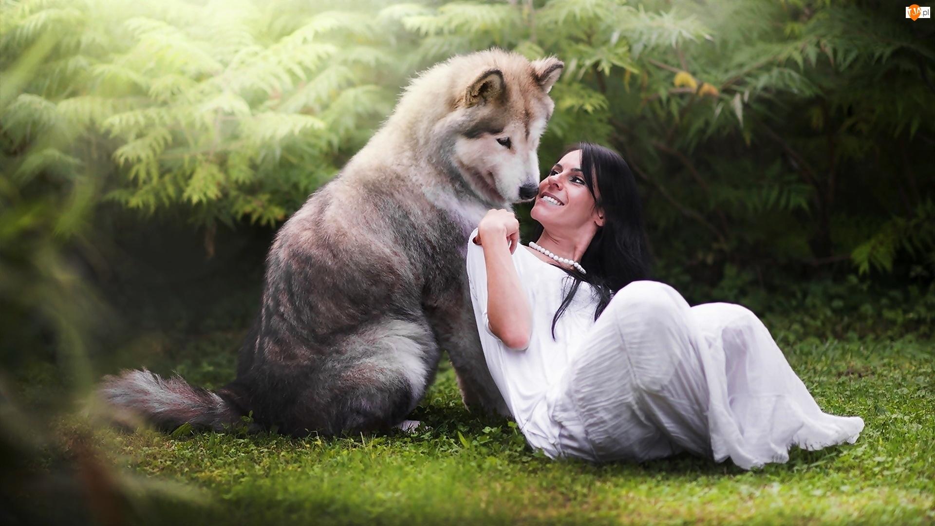 Brunetka, Pies, Siberian Husky