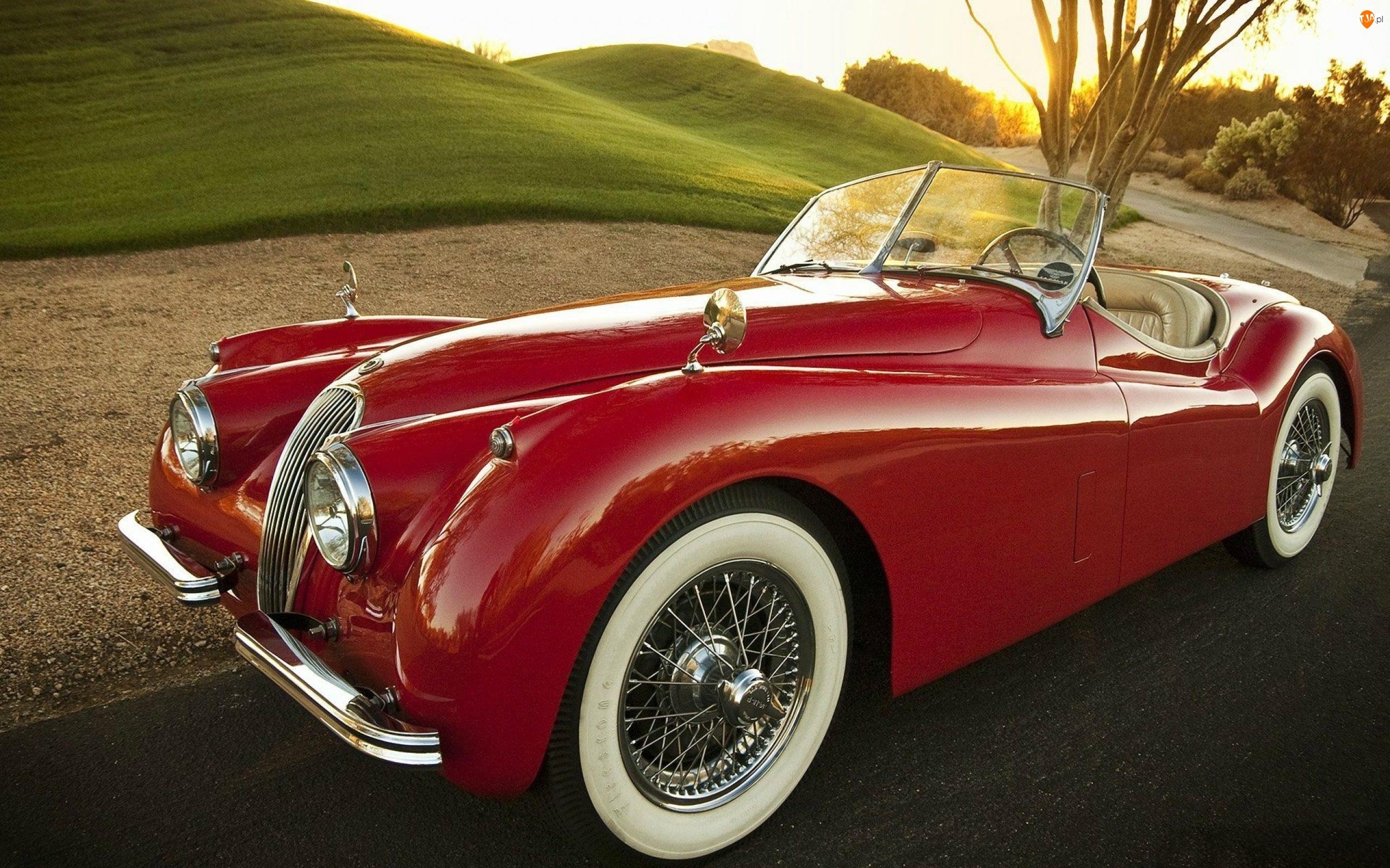 Roadster, 1954, XK, Jaguar, 120
