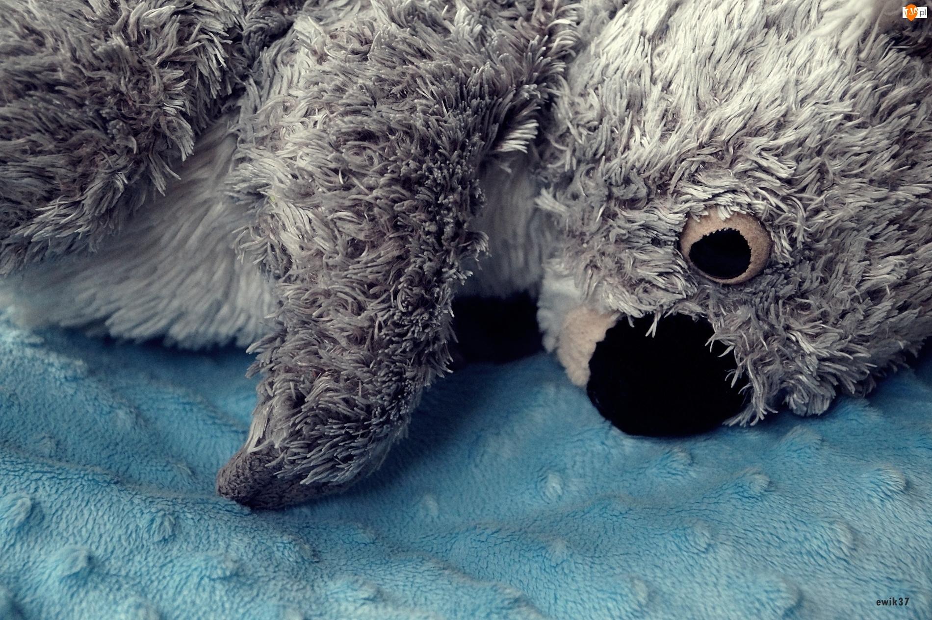 Koala, Pluszowy, Miś