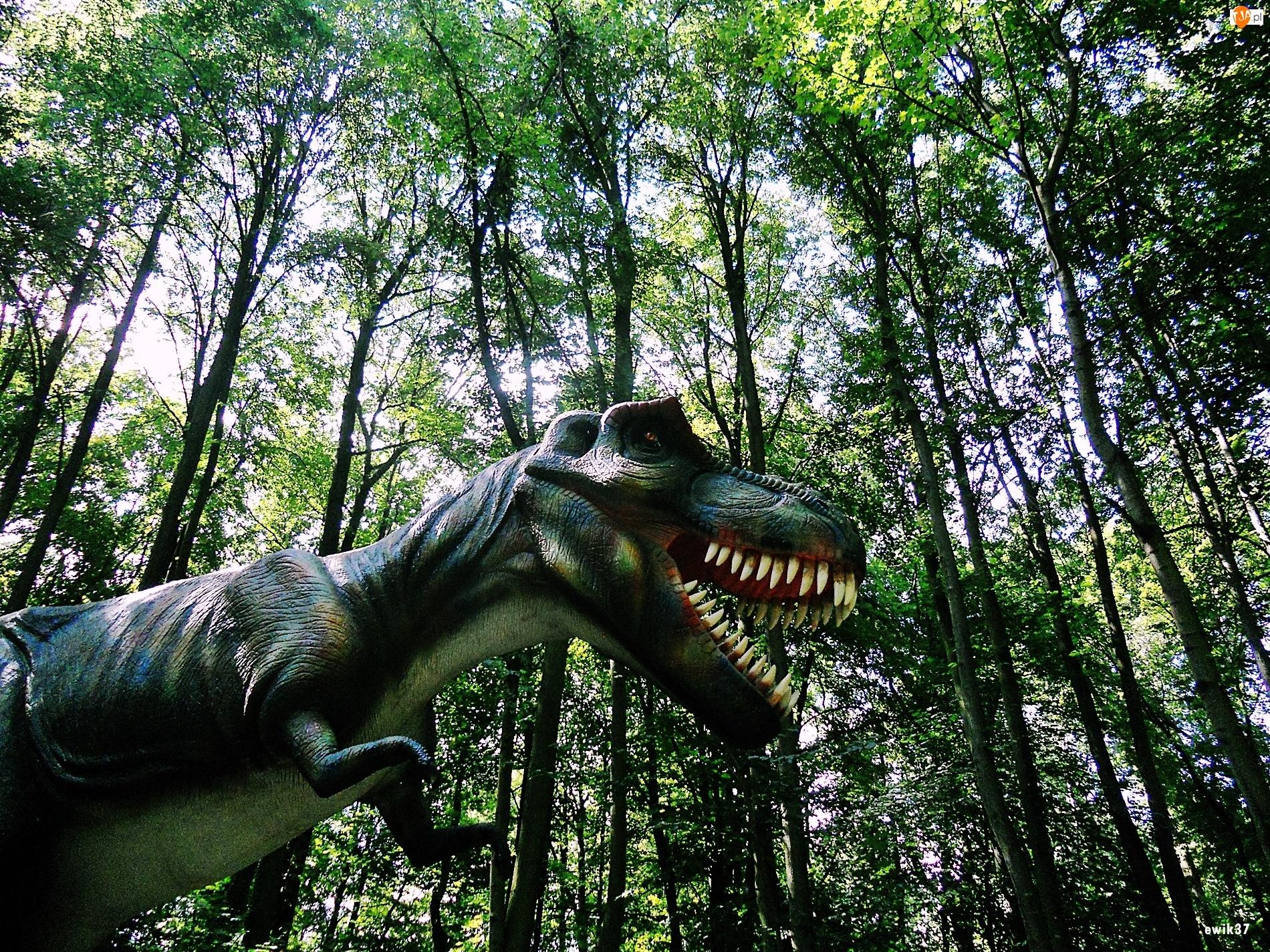 Dinozaur, Las, Drzewa