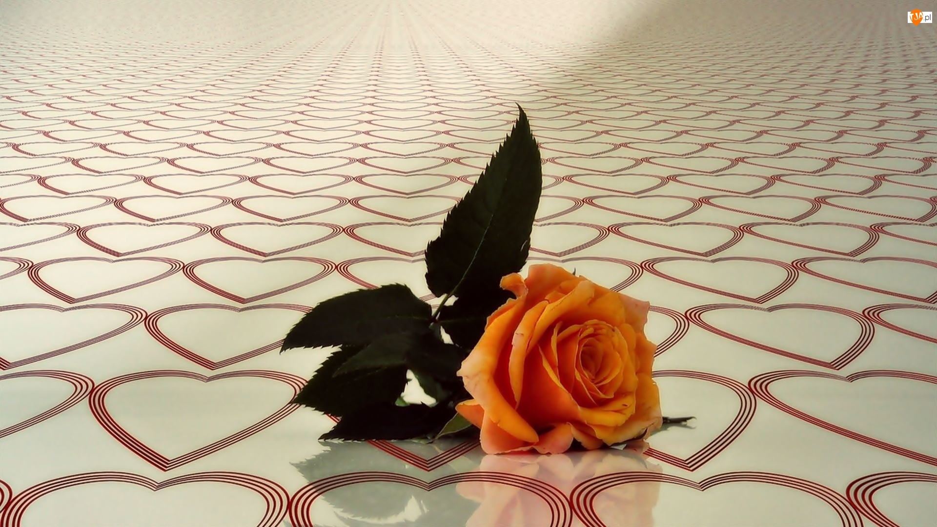 Serduszka, Pomarańczowa, Róża