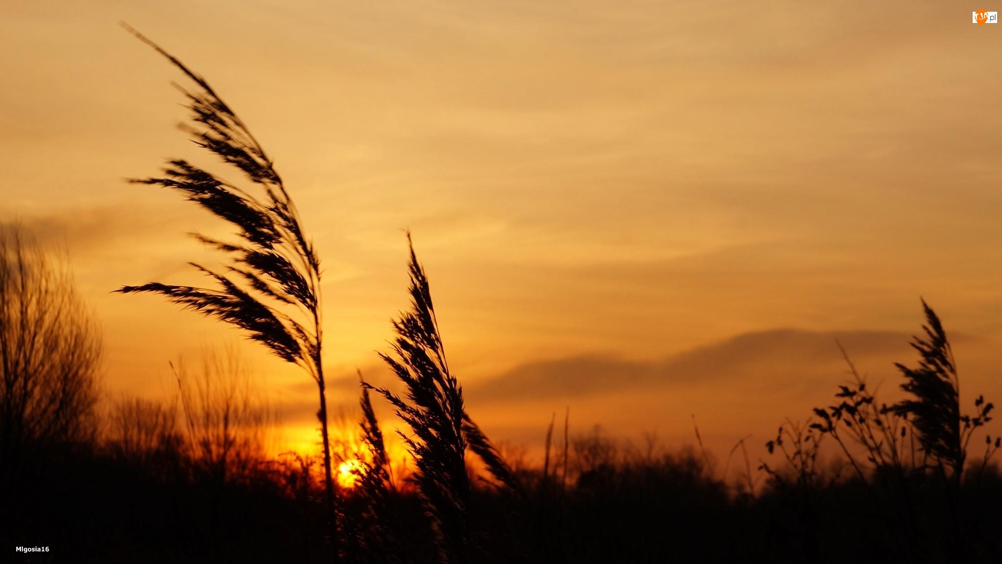 Trzcina, Zachód słońca