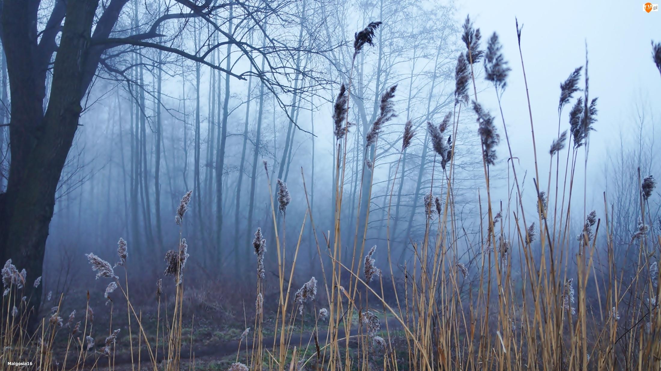 Trzcina, Drzewa, Mgła