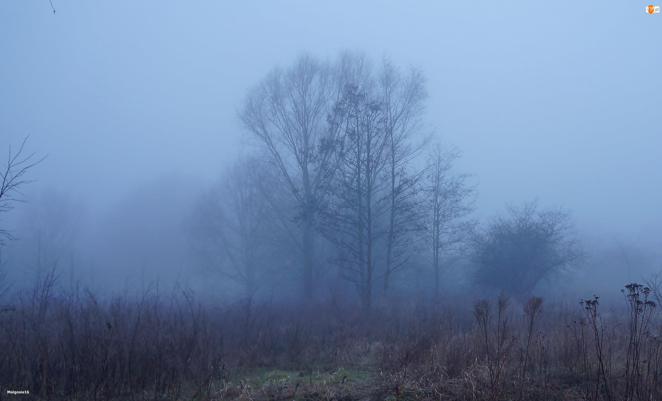 Polana, Mgła, Drzewa