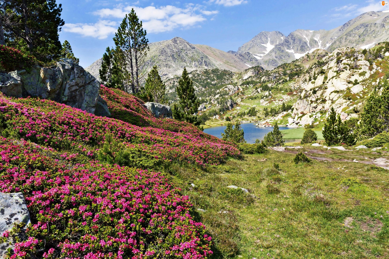 Rododendrony, Wiosna, Jezioro, Góry, Łąk