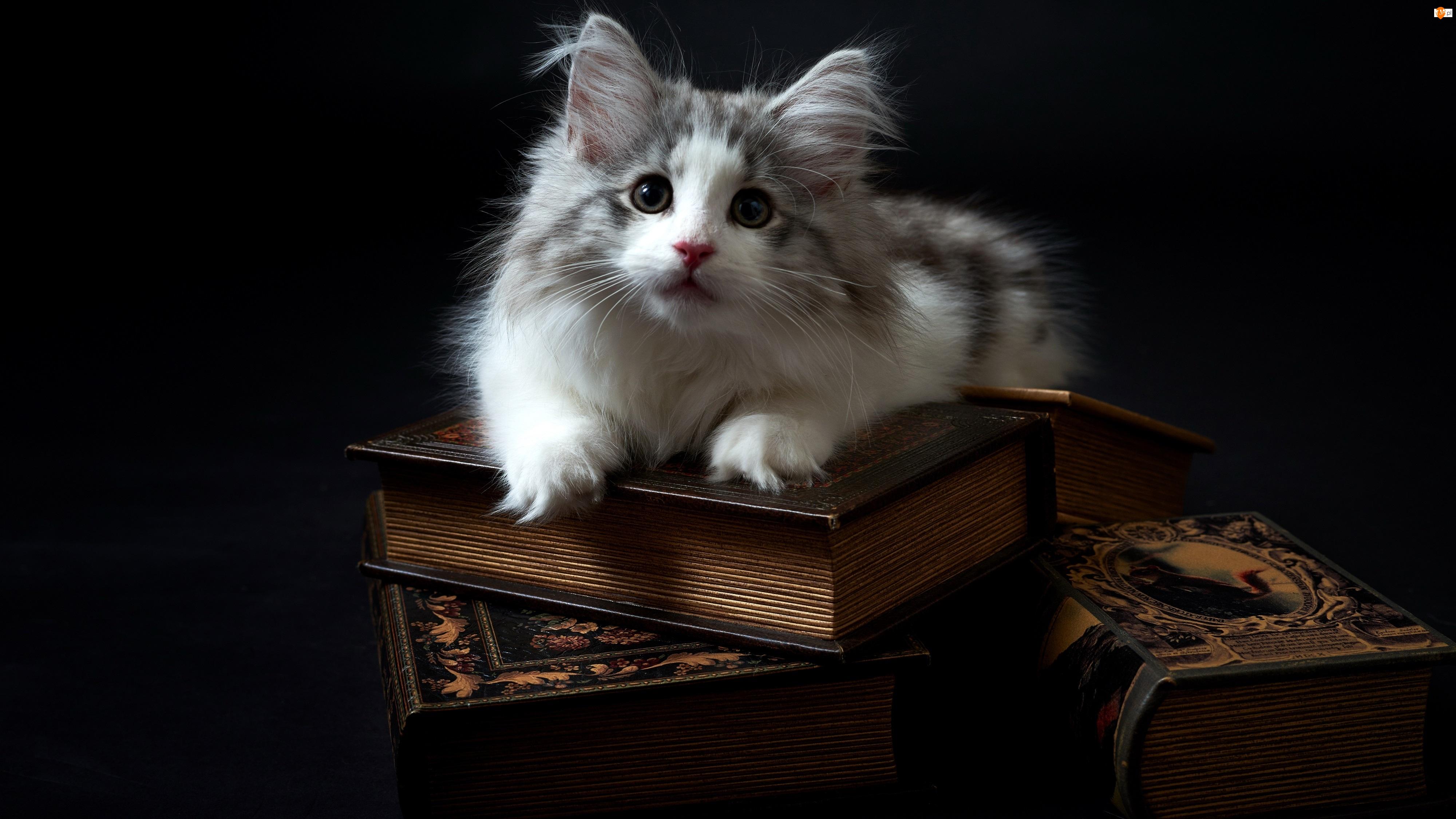 Księgi, Mały, Kotek