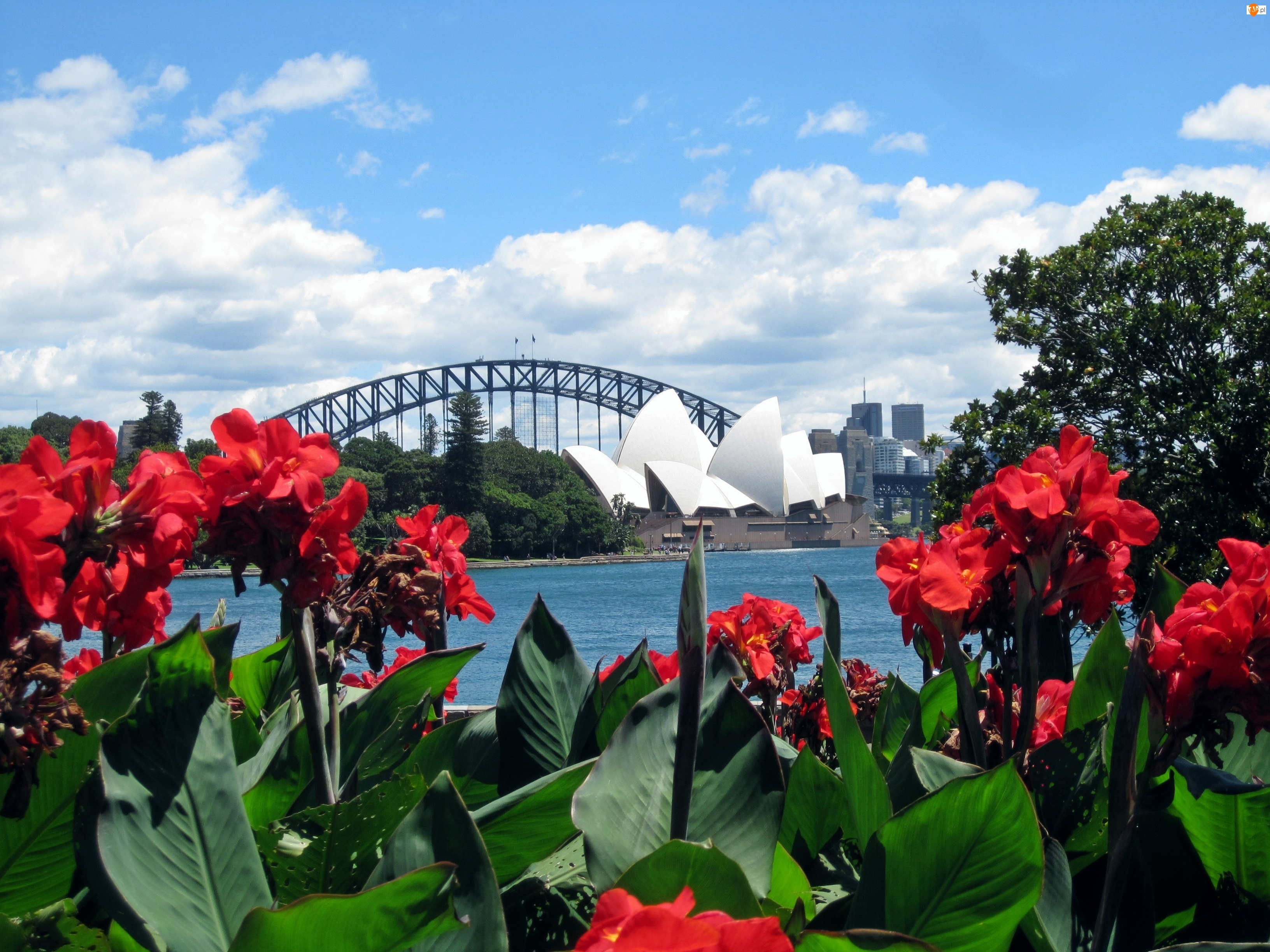Czerwone, Sydney, Kwiaty, Panorama