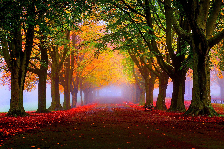 Mgła, Jesień, Drzewa, Park, Aleja
