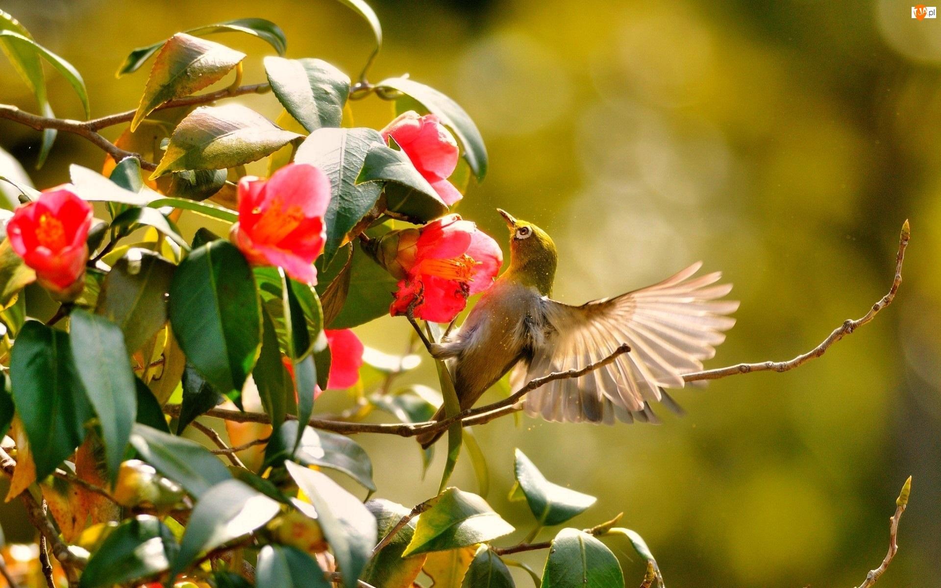 Koliber, Kwiaty, Krzew, Czerwone