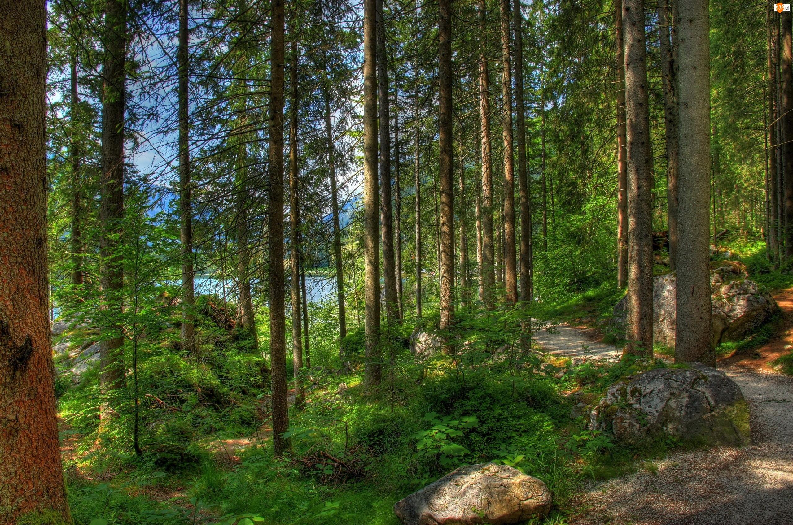 Las, Cienie, Droga, Jezioro