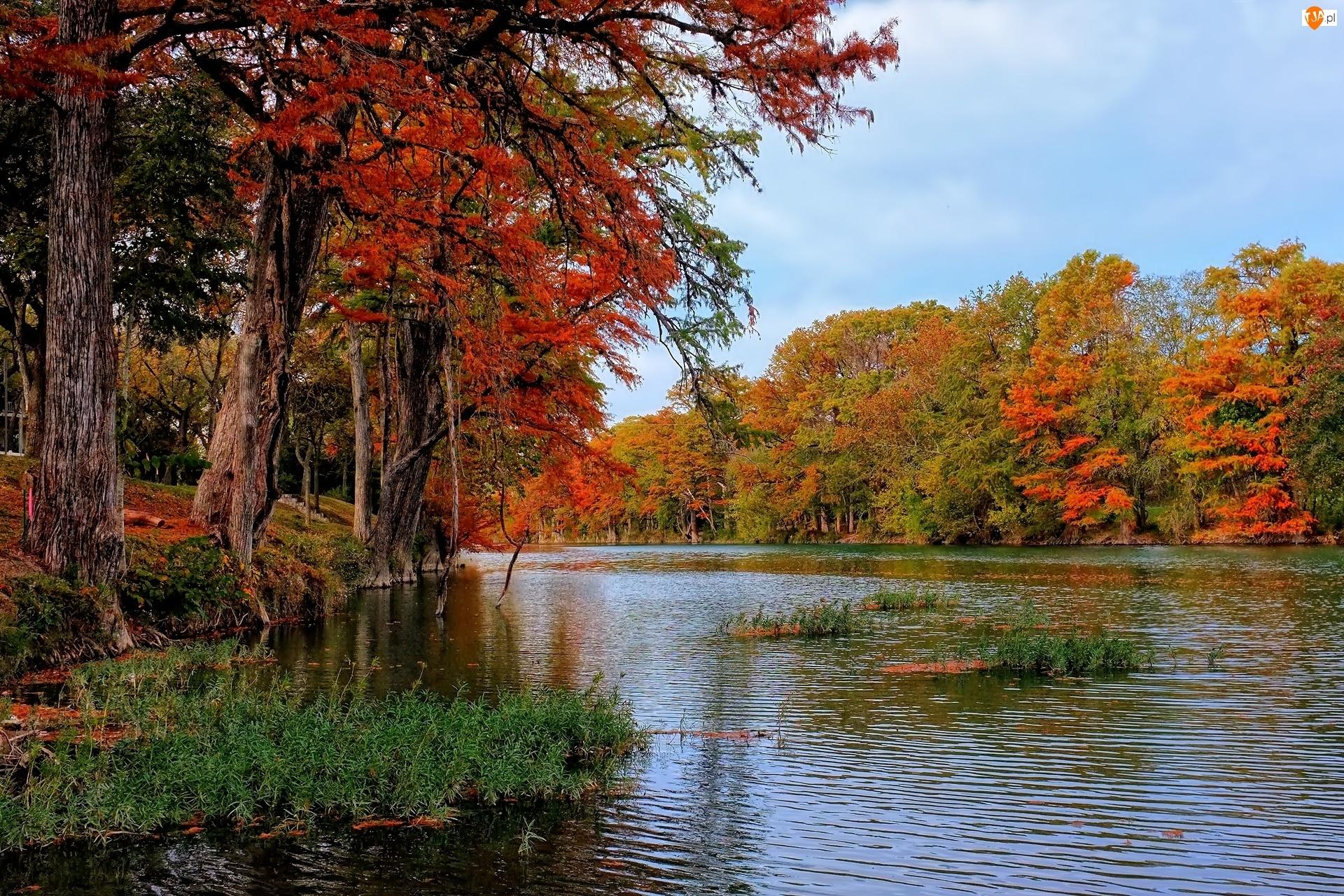 Rzeka, Jesień, Las