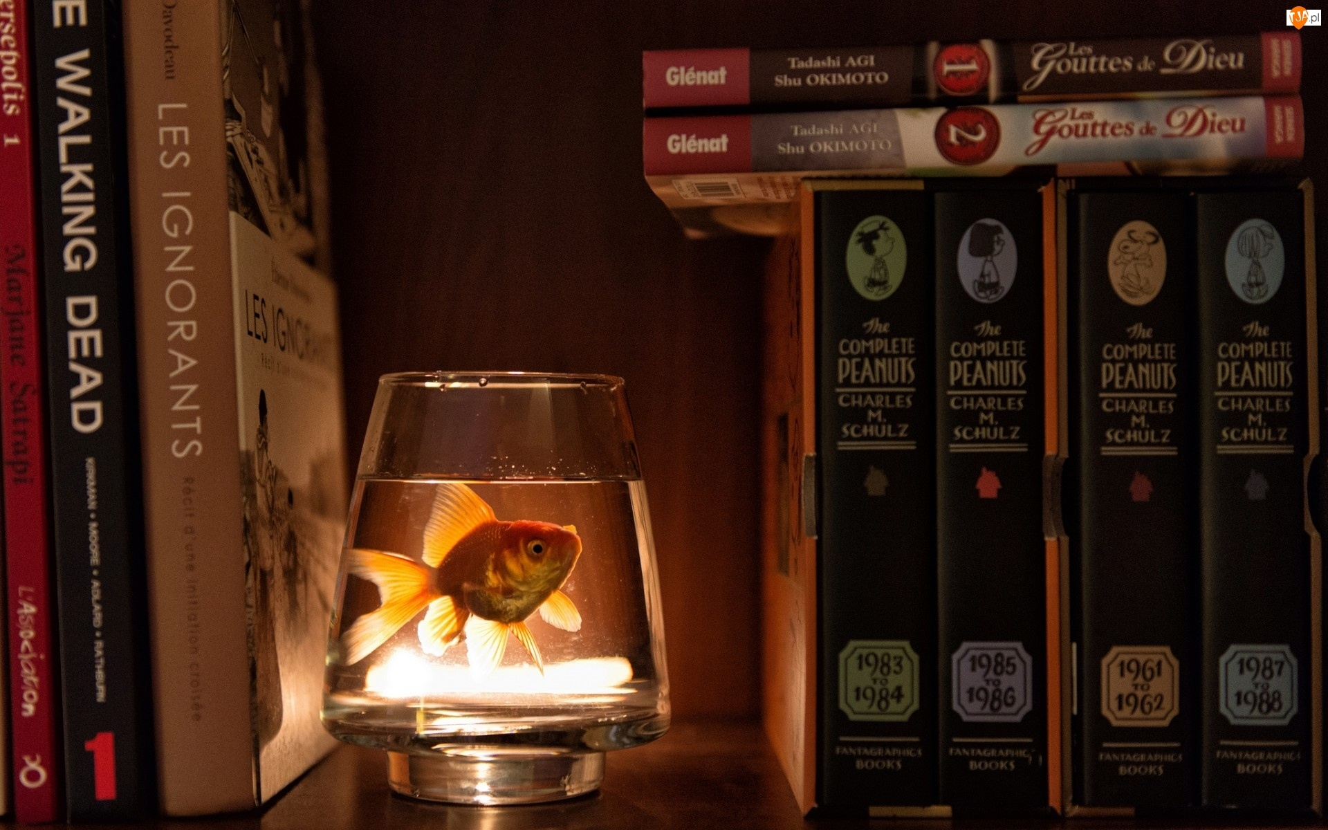 Książki, Rybka, Akwarium, Małe, Biblioteczka