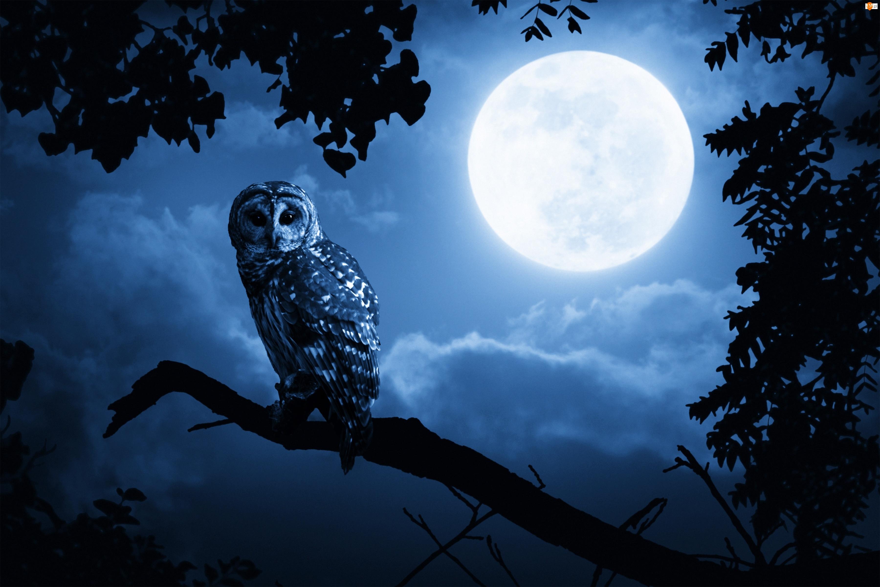 Noc, Sowa, Drzewa, Włochatka, Księżyc