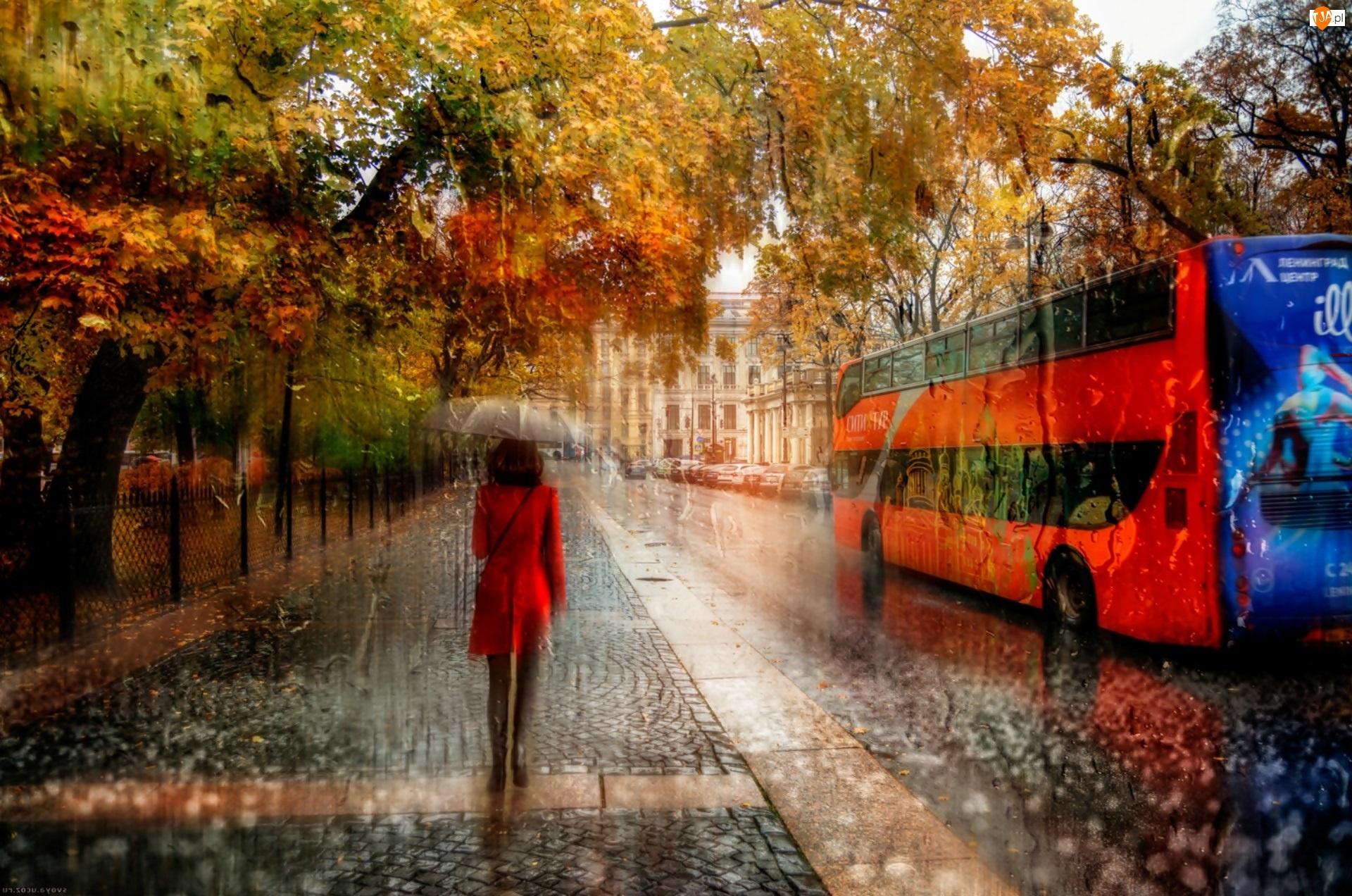 Ulica, Kobieta, Jesień, Parasol, Deszcz, Autobus