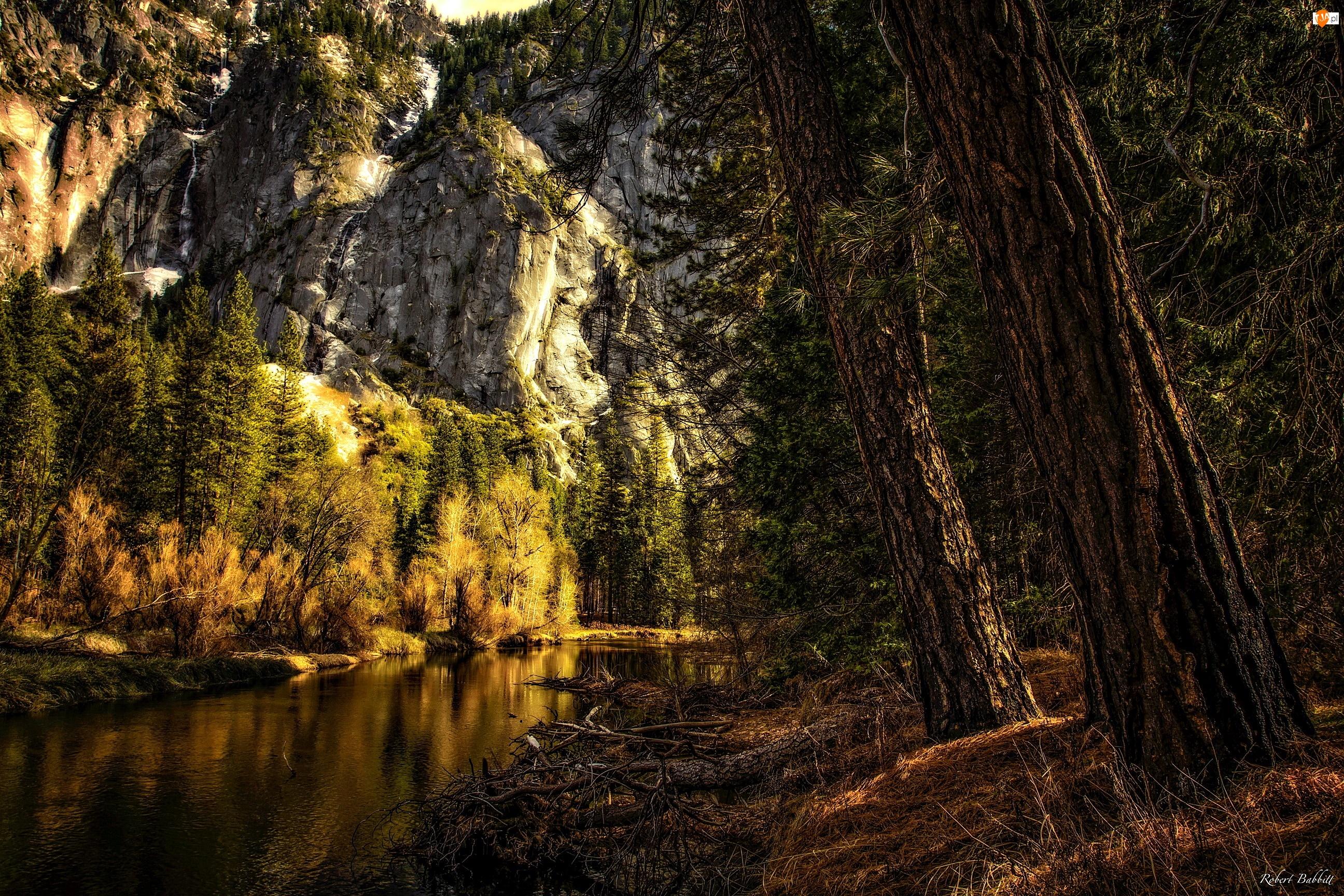 Park Narodowy Yosemite, Drzewa, Stany Zjednoczone, Las, Stan Kalifornia, Góry