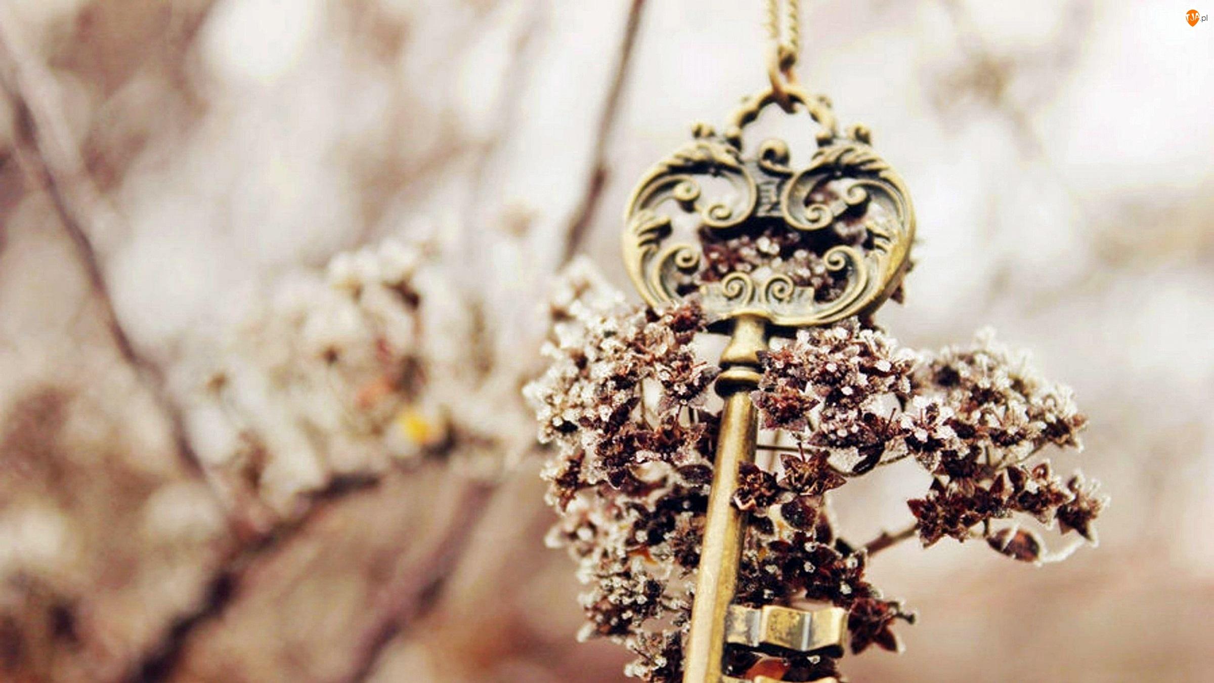 Rozmycie, Łańcuszek, Kwiaty, Klucz, Pamiątka