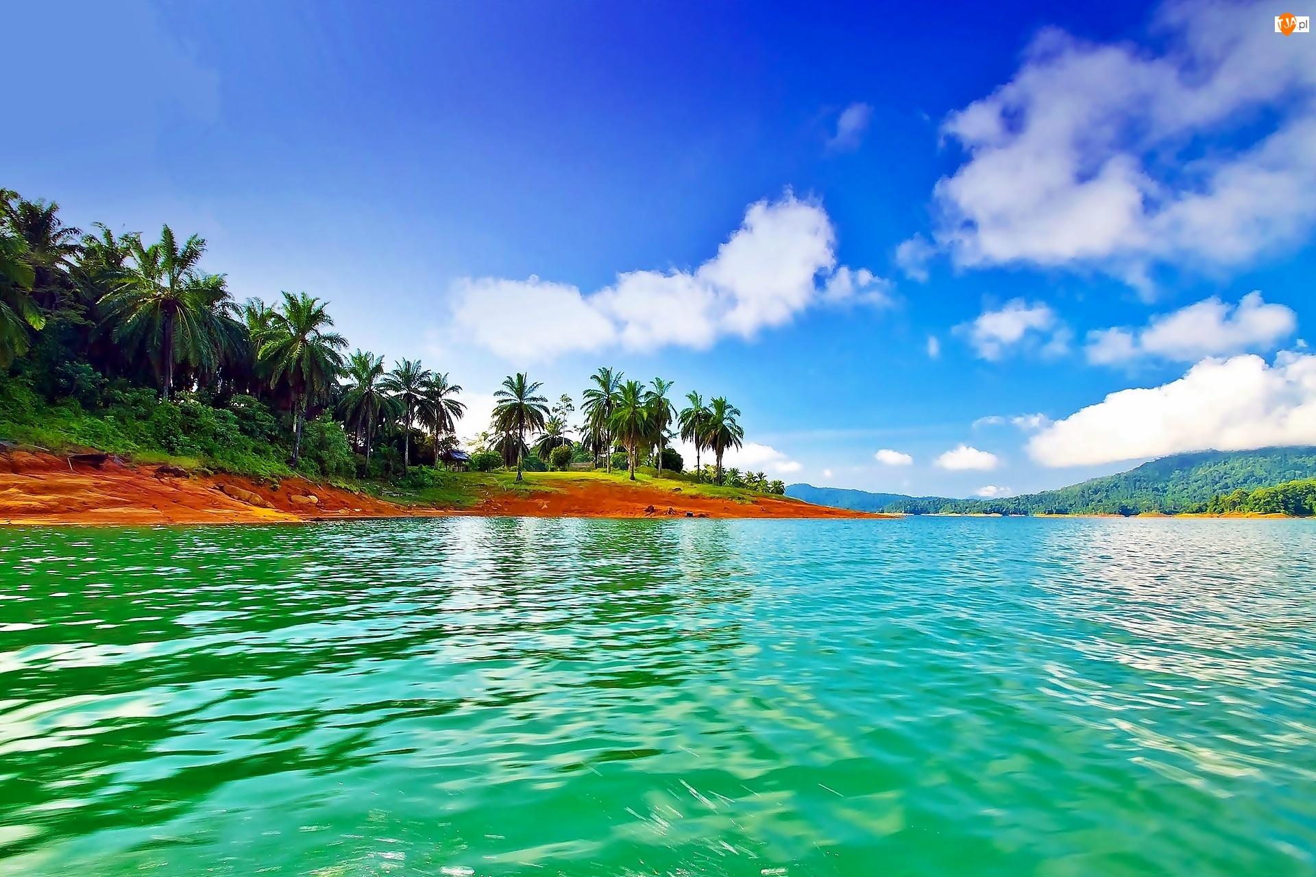 Morze, Tropiki, Wybrzeże, Palmy