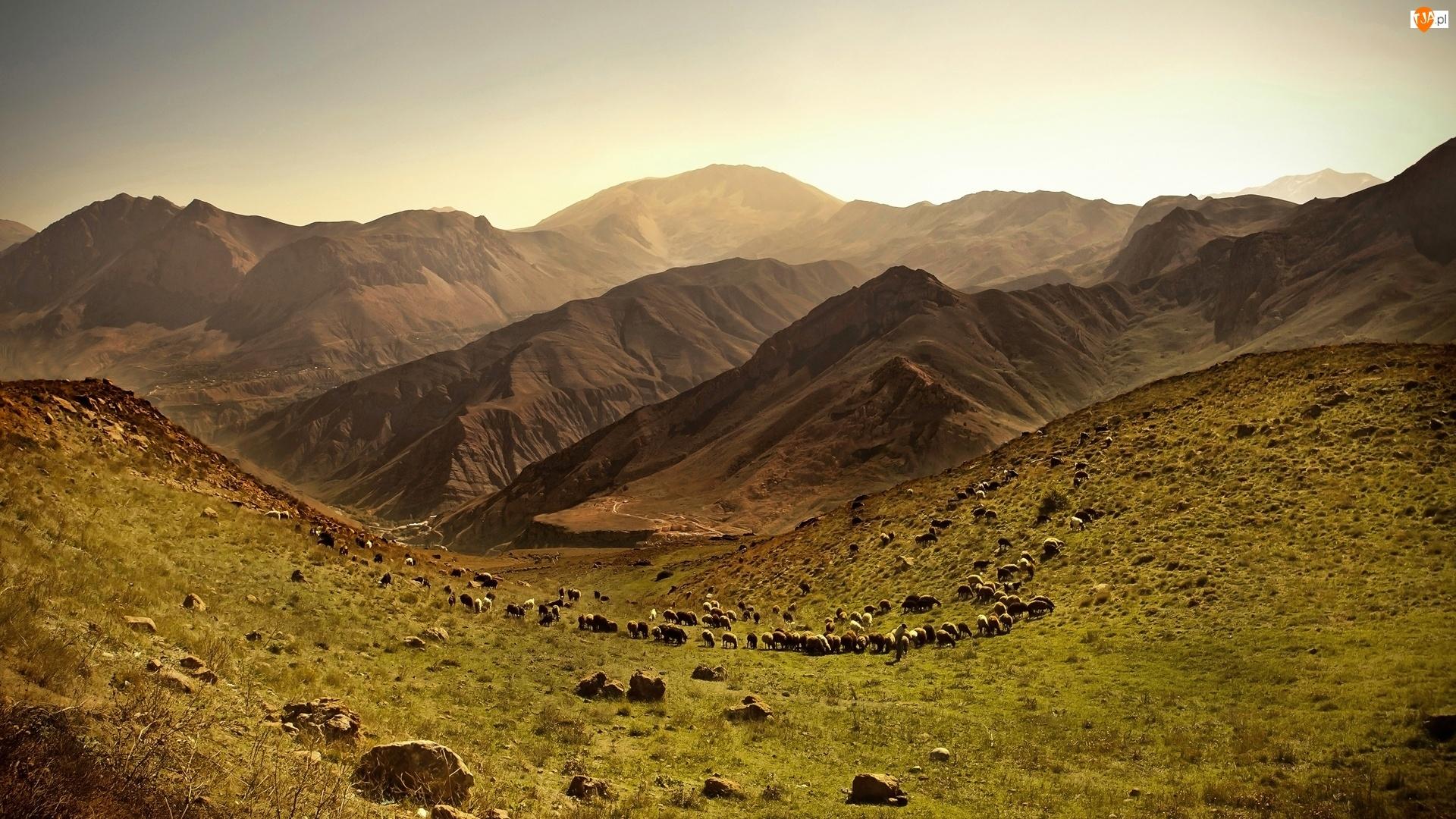 Owce, Góry, Dolina