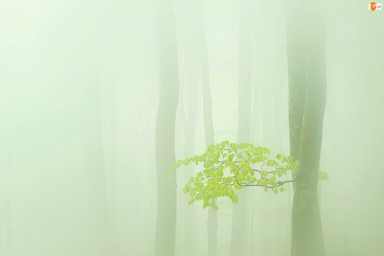 Liście, Pnie, Gałązka, Mgła