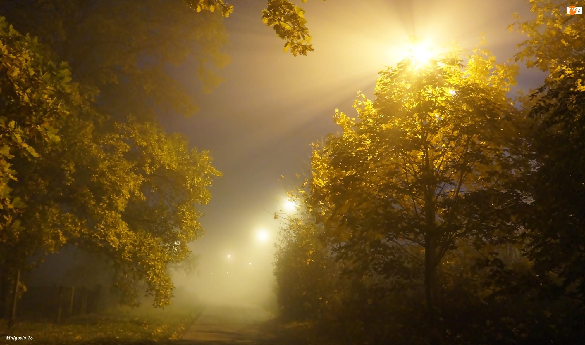 Drzewa, Przebijające Światło, Noc, Mgła