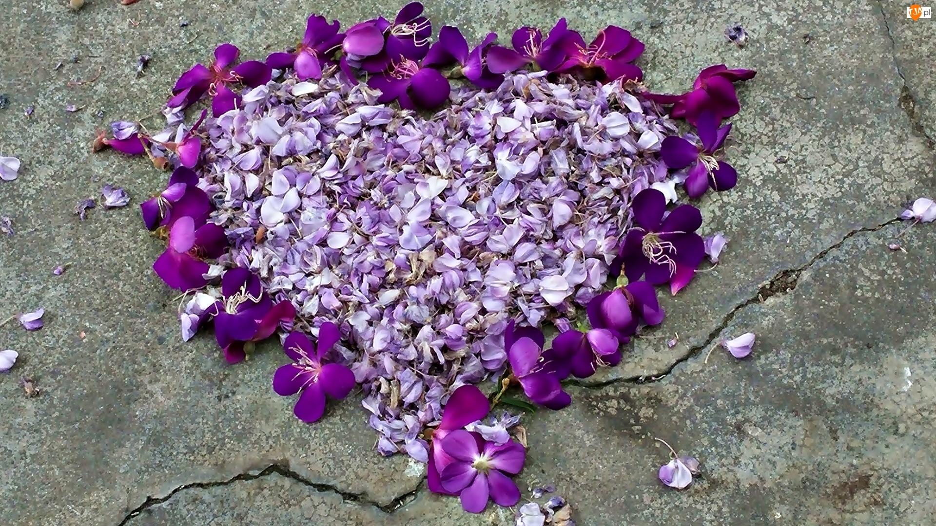 Miłość, Walentynki, Kwiaty, Fioletowe, Serce