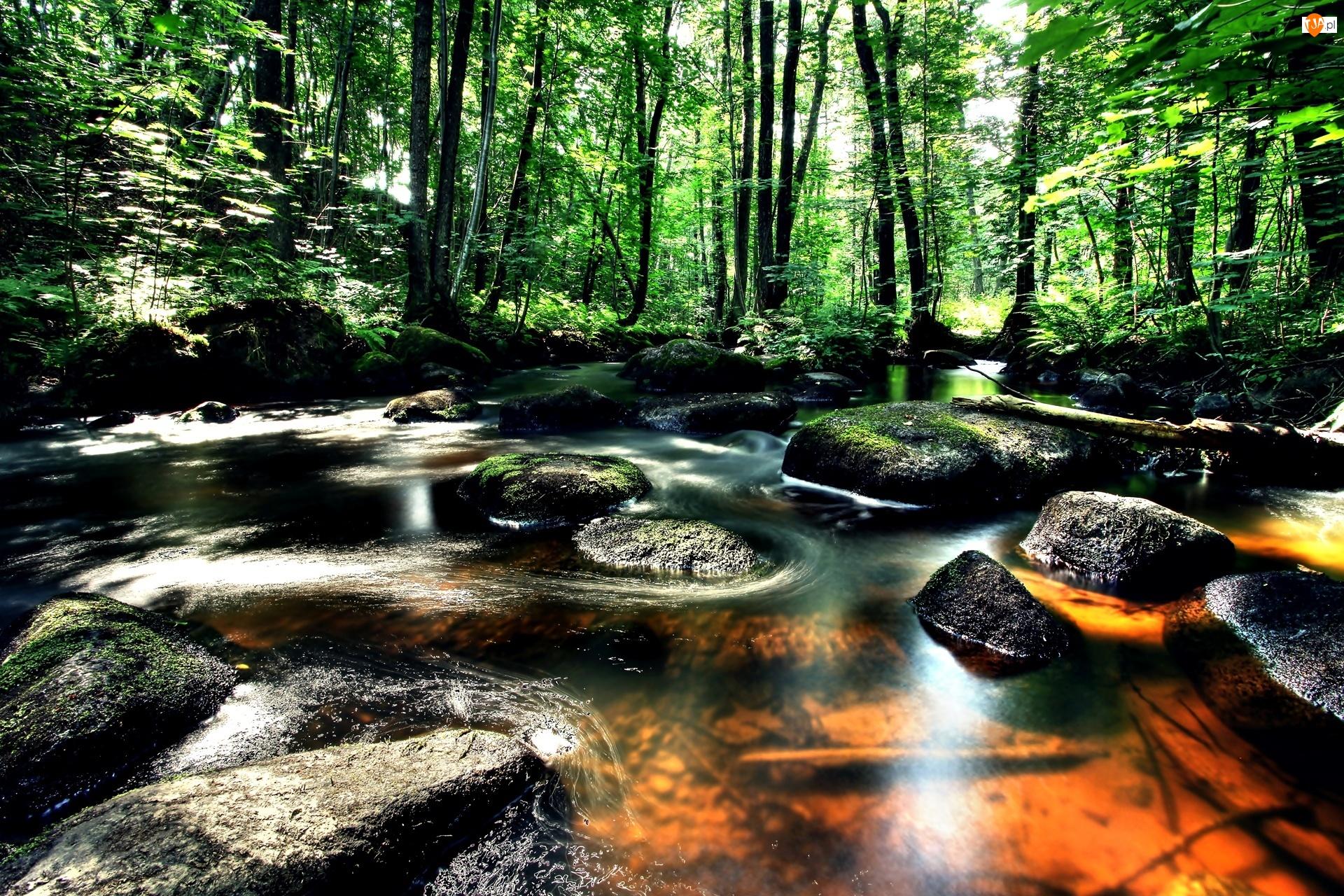 Las, Drzewa, Rzeka, Kamienie