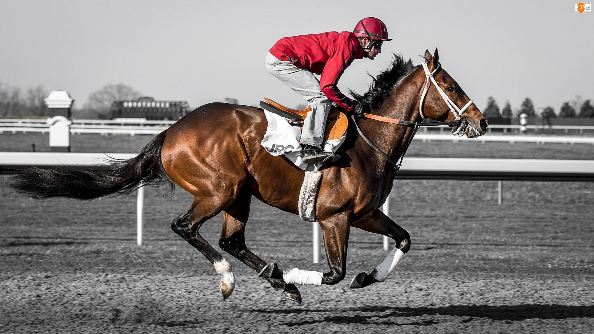 Wyścigi, Mężczyzna, Koń