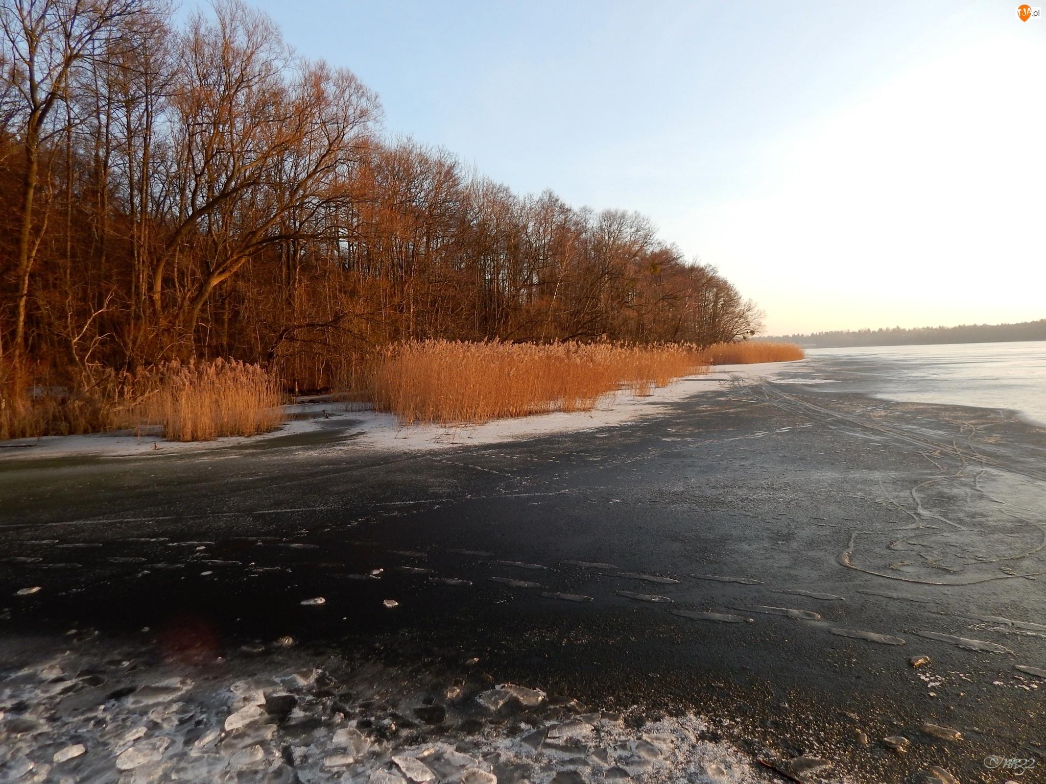 Jezioro, Trzcina, Lód, Drzewa
