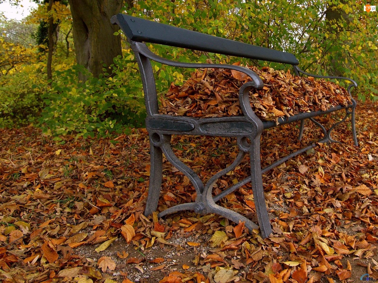 liście, Jesień, ławka, las, suche